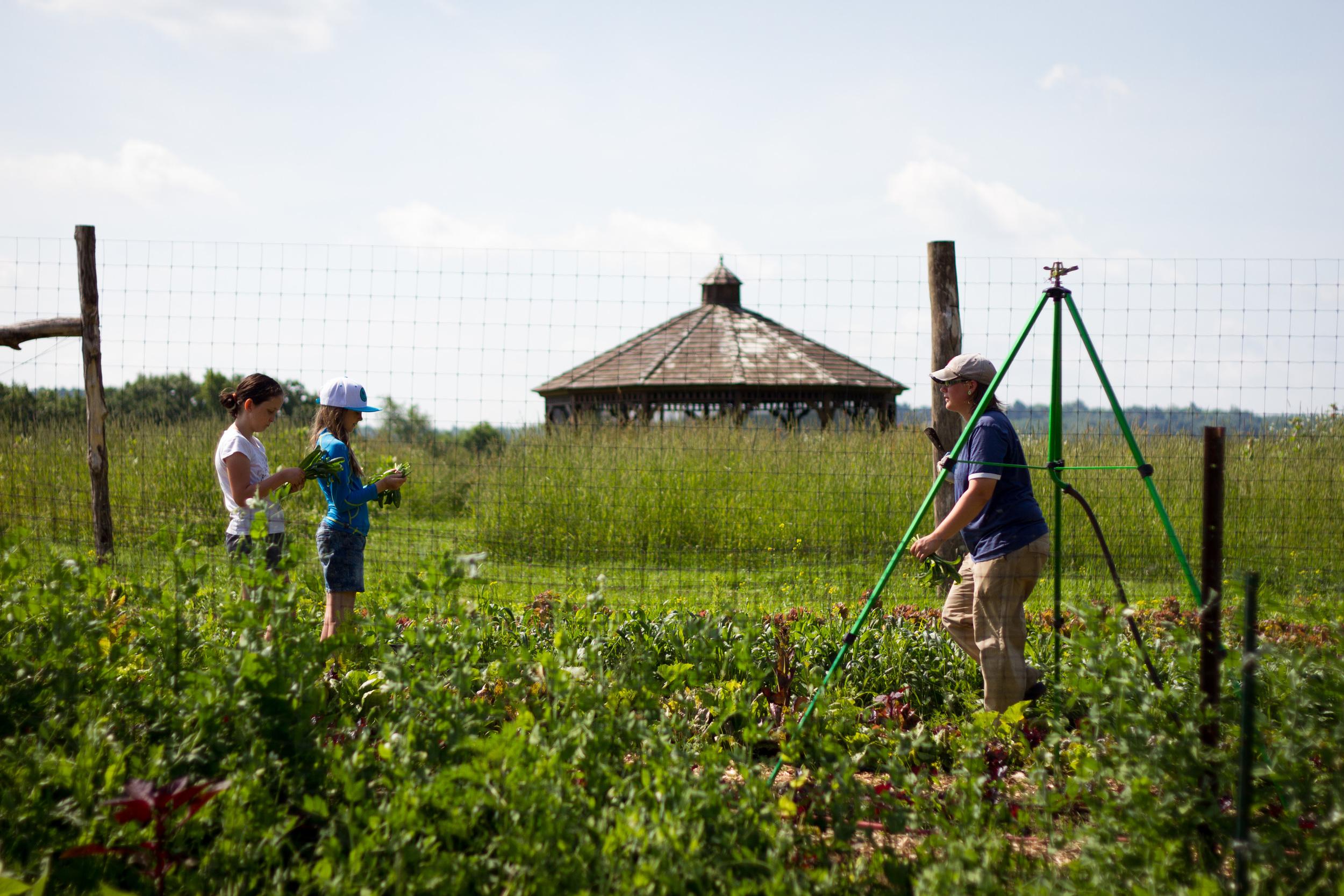 Farm&Garden-11.jpg