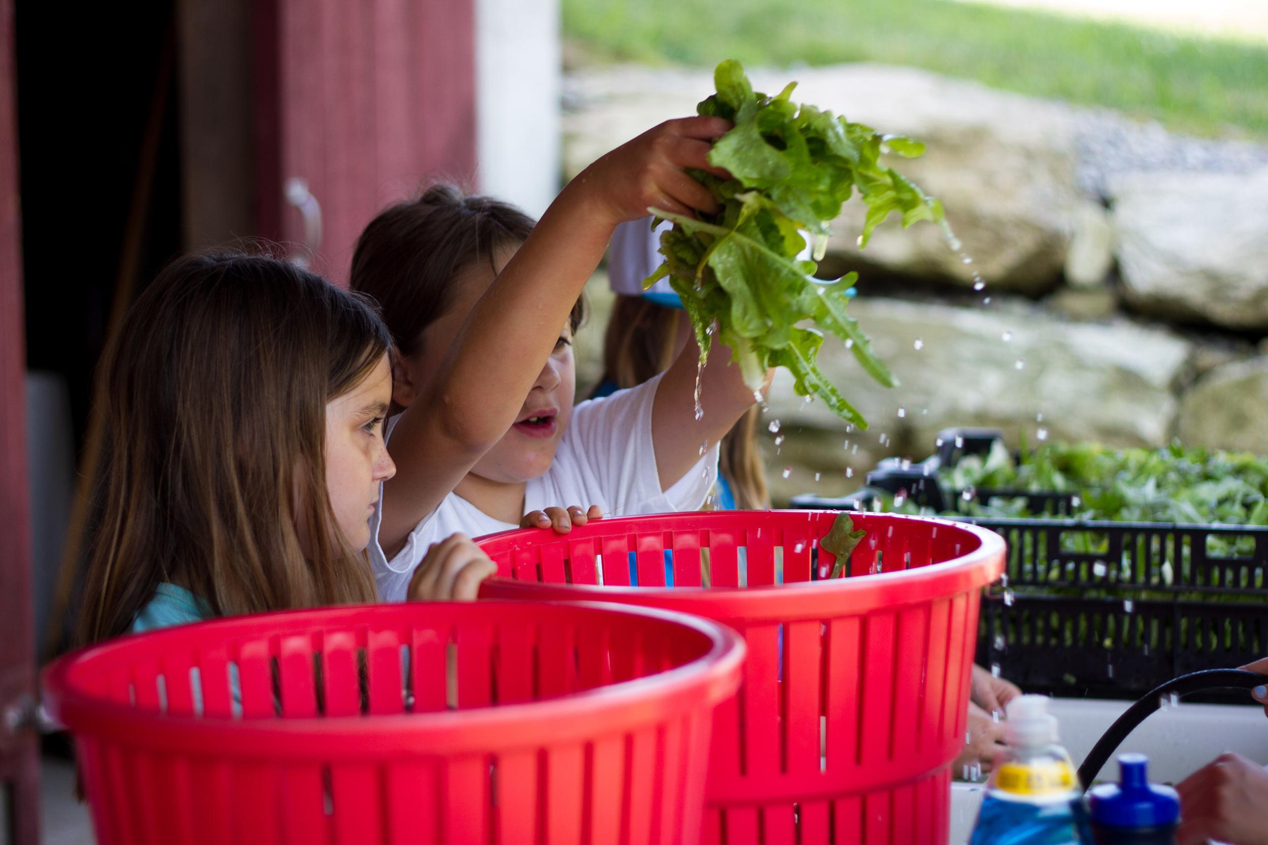 Farm&Garden-13.jpg