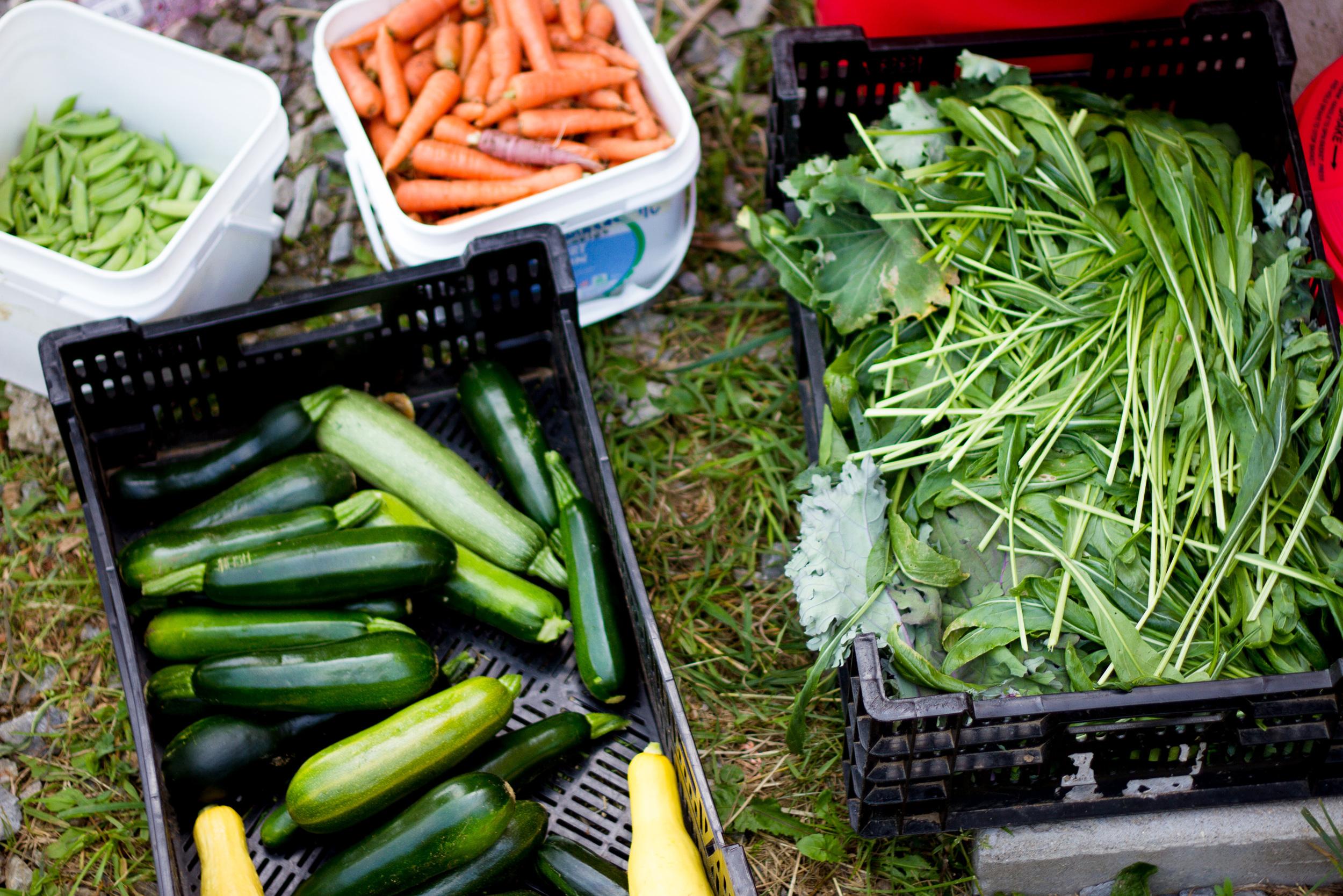 Farm&Garden-18.jpg