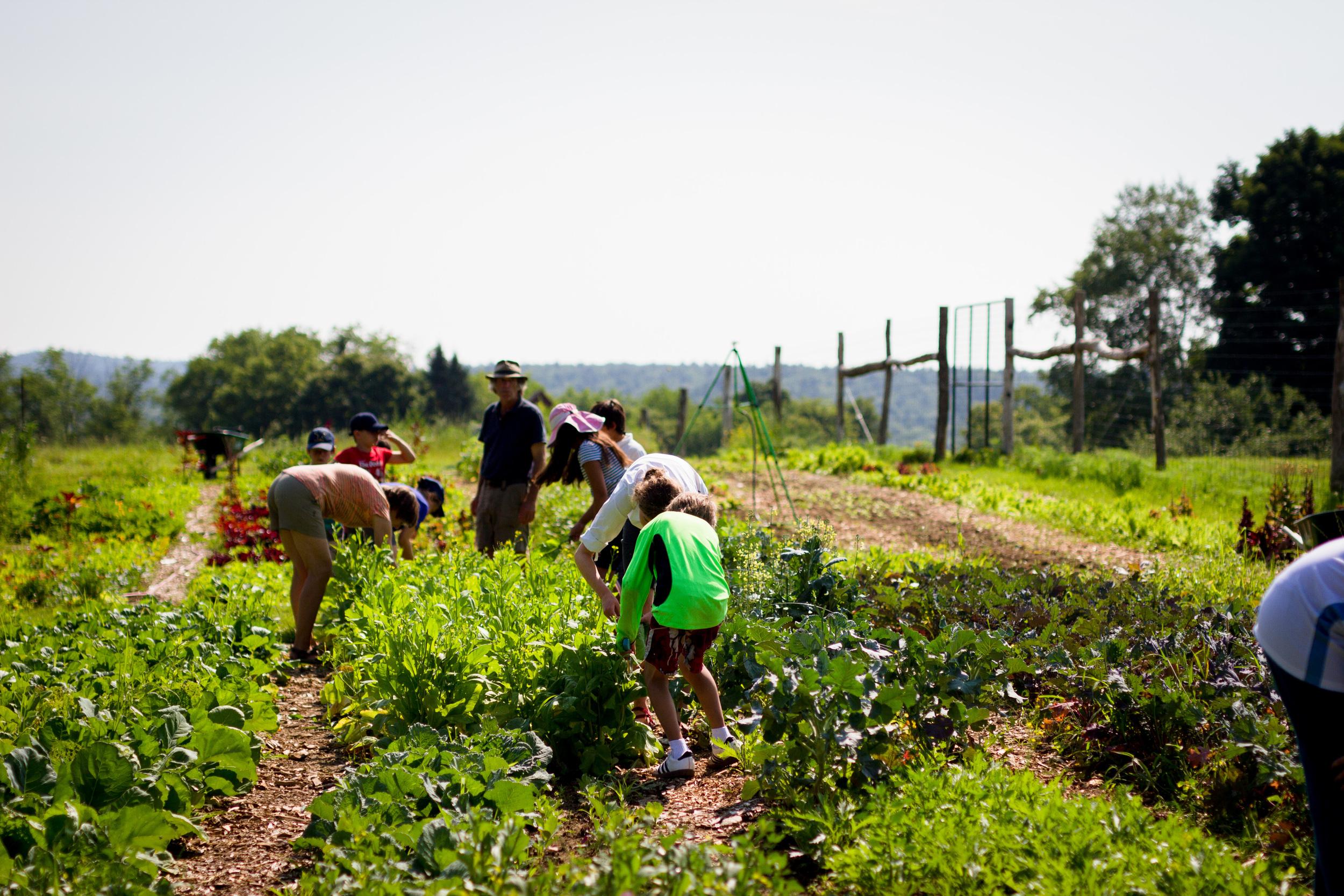 Farm&Garden-30.jpg