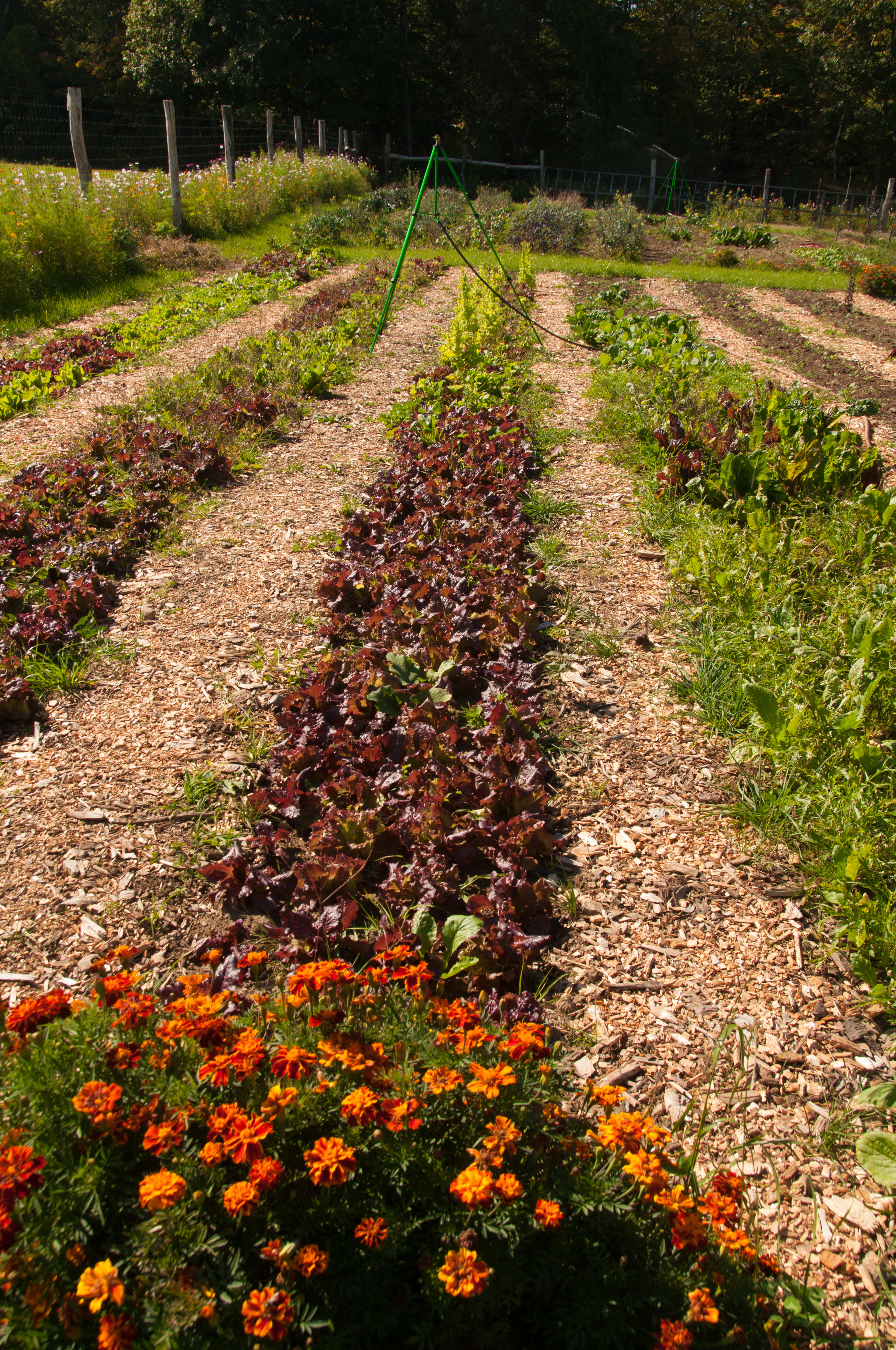 Farm&Garden-36.jpg