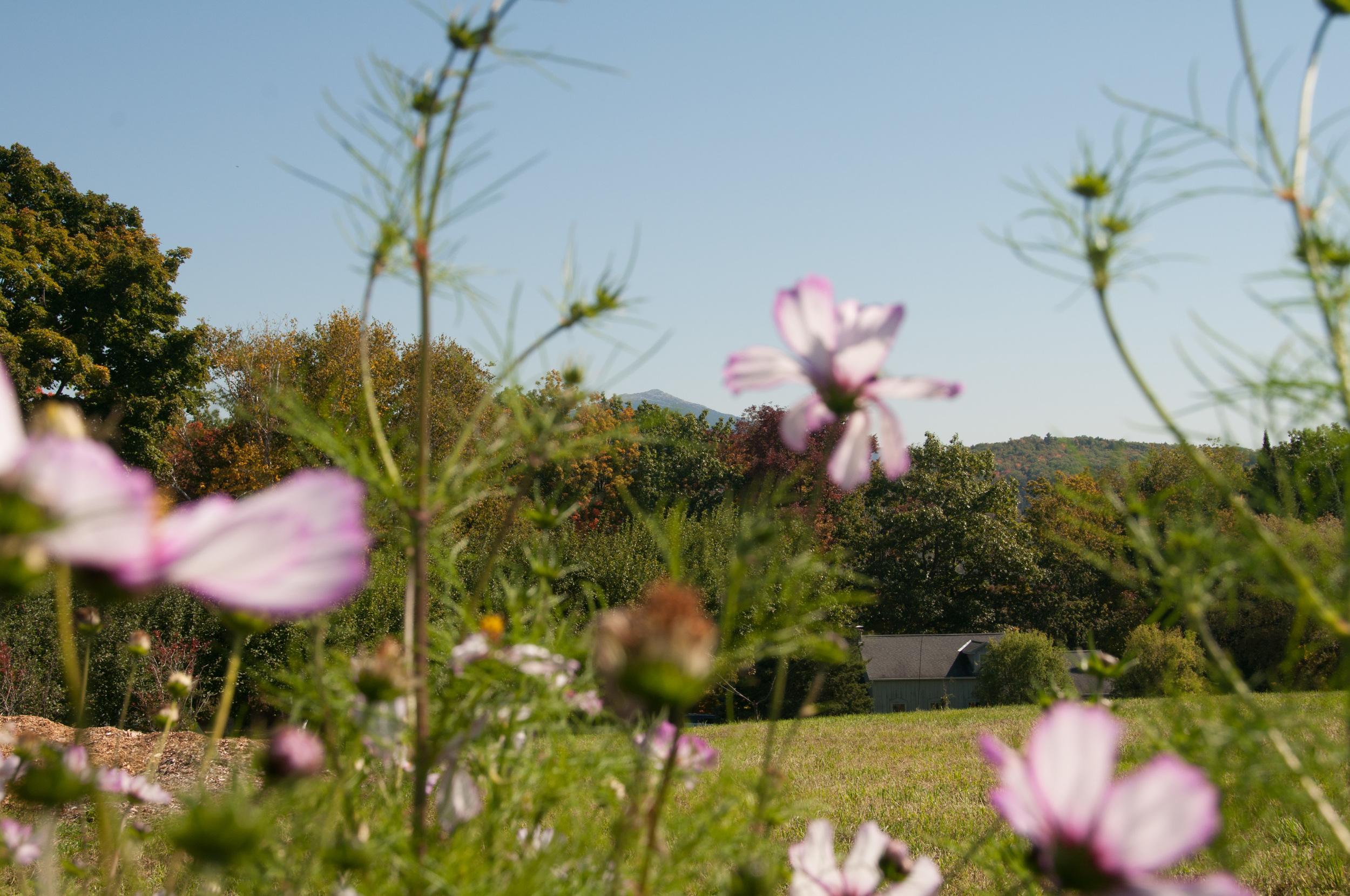 Farm&Garden-38.jpg
