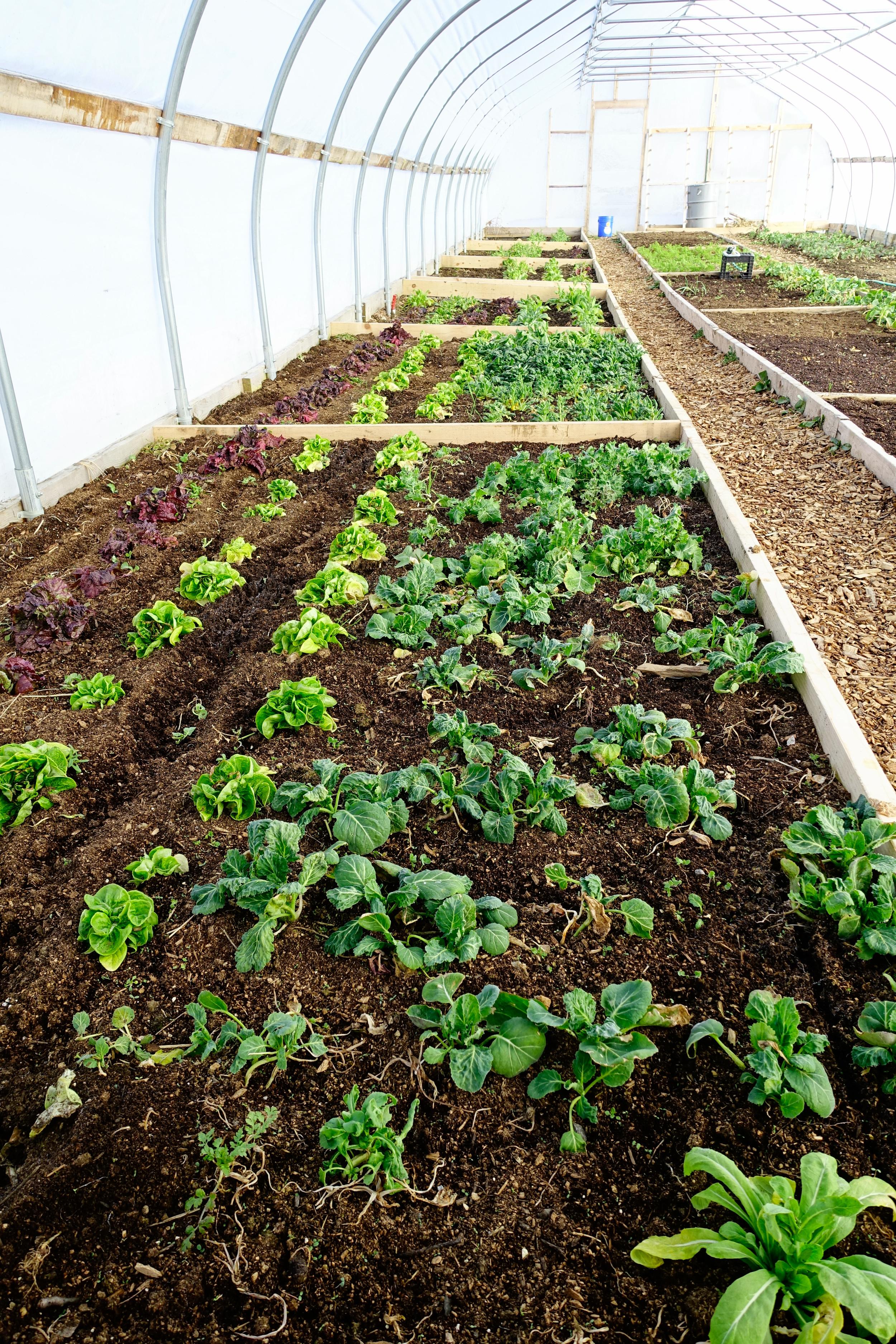 Farm&Garden-52.jpg