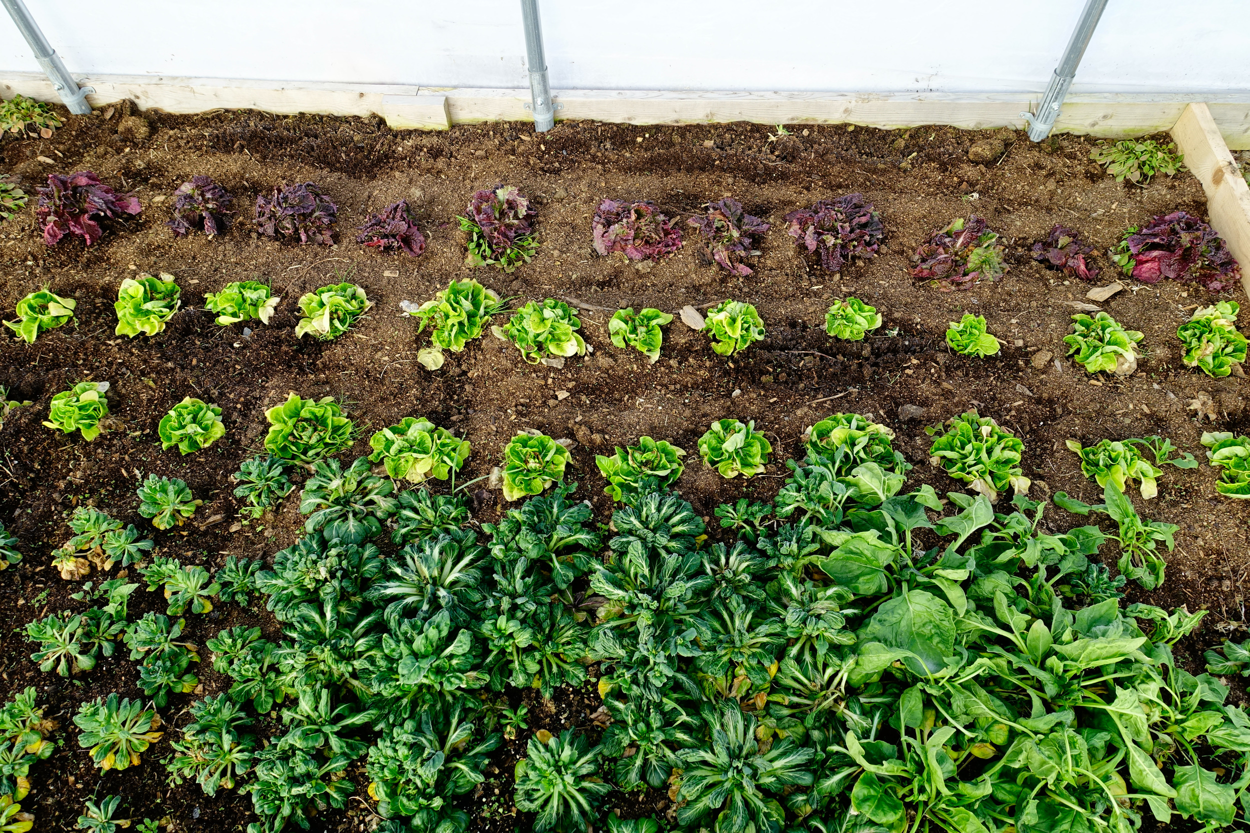 Farm&Garden-53.jpg