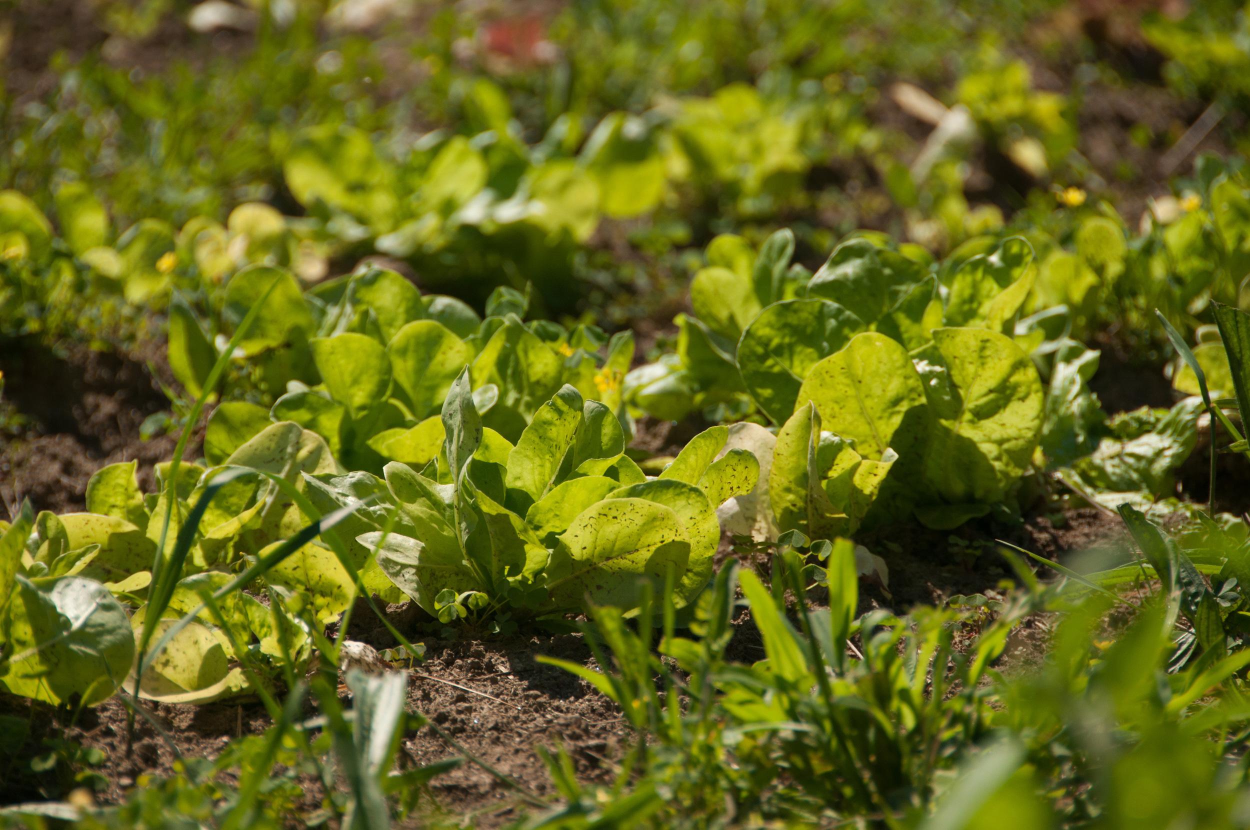 Farm&Garden-65.jpg