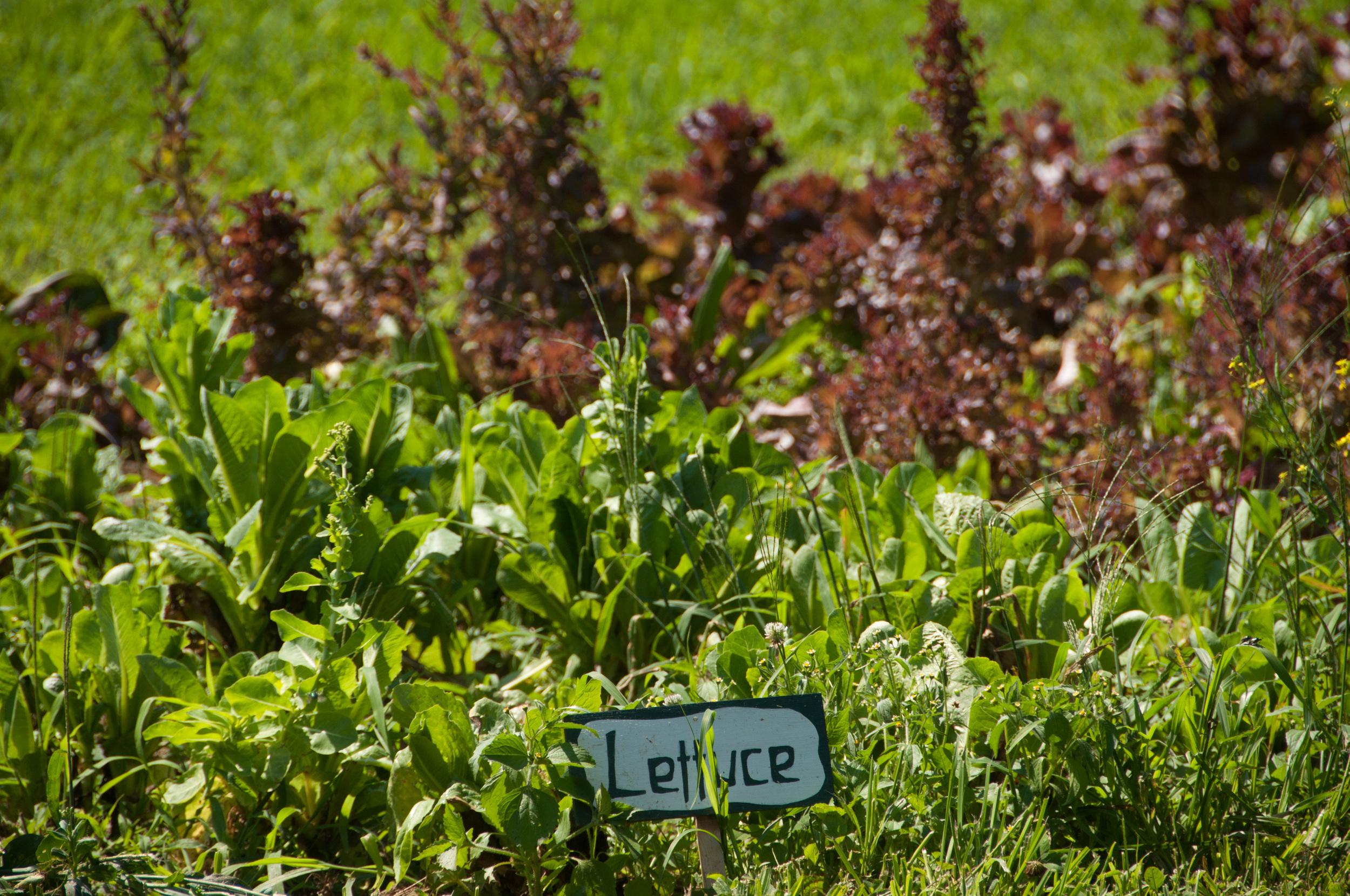 Farm&Garden-66.jpg