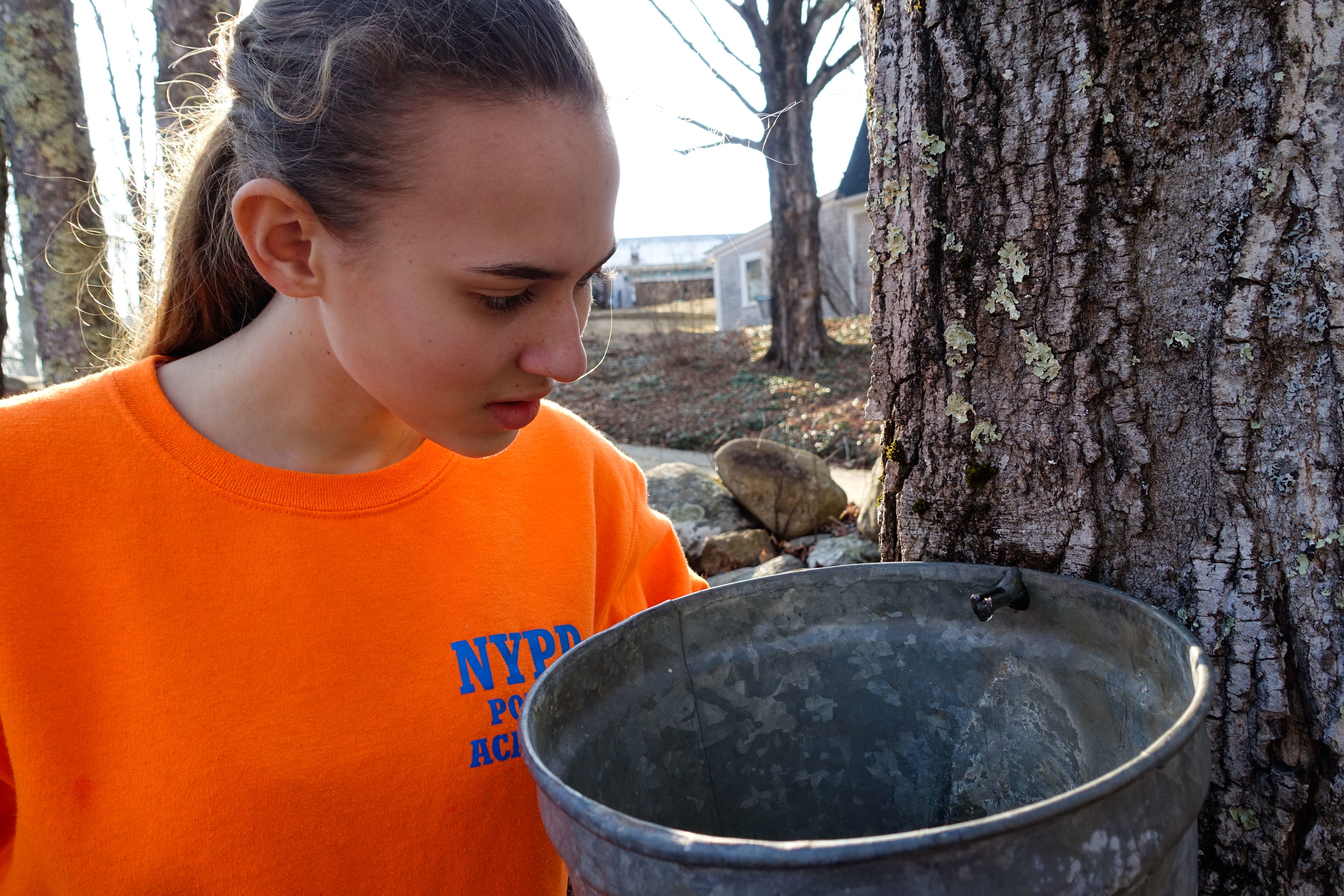 A warm day-- the sap ran as soon as the hole was drilled!