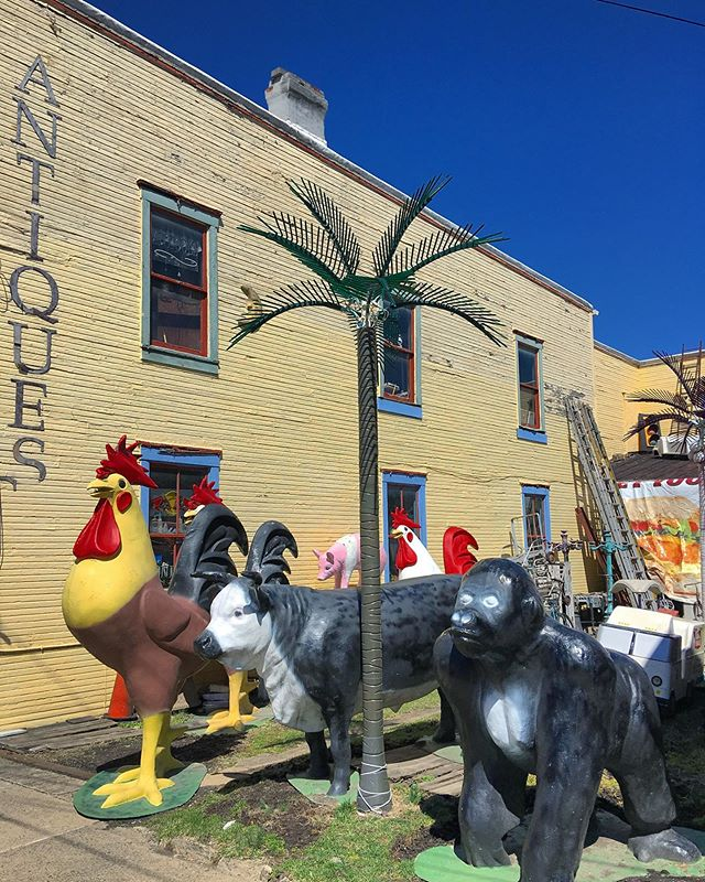 A cock, a heifer and a gorilla meet under a palm.... #jokes and #antiques in #Charleroi