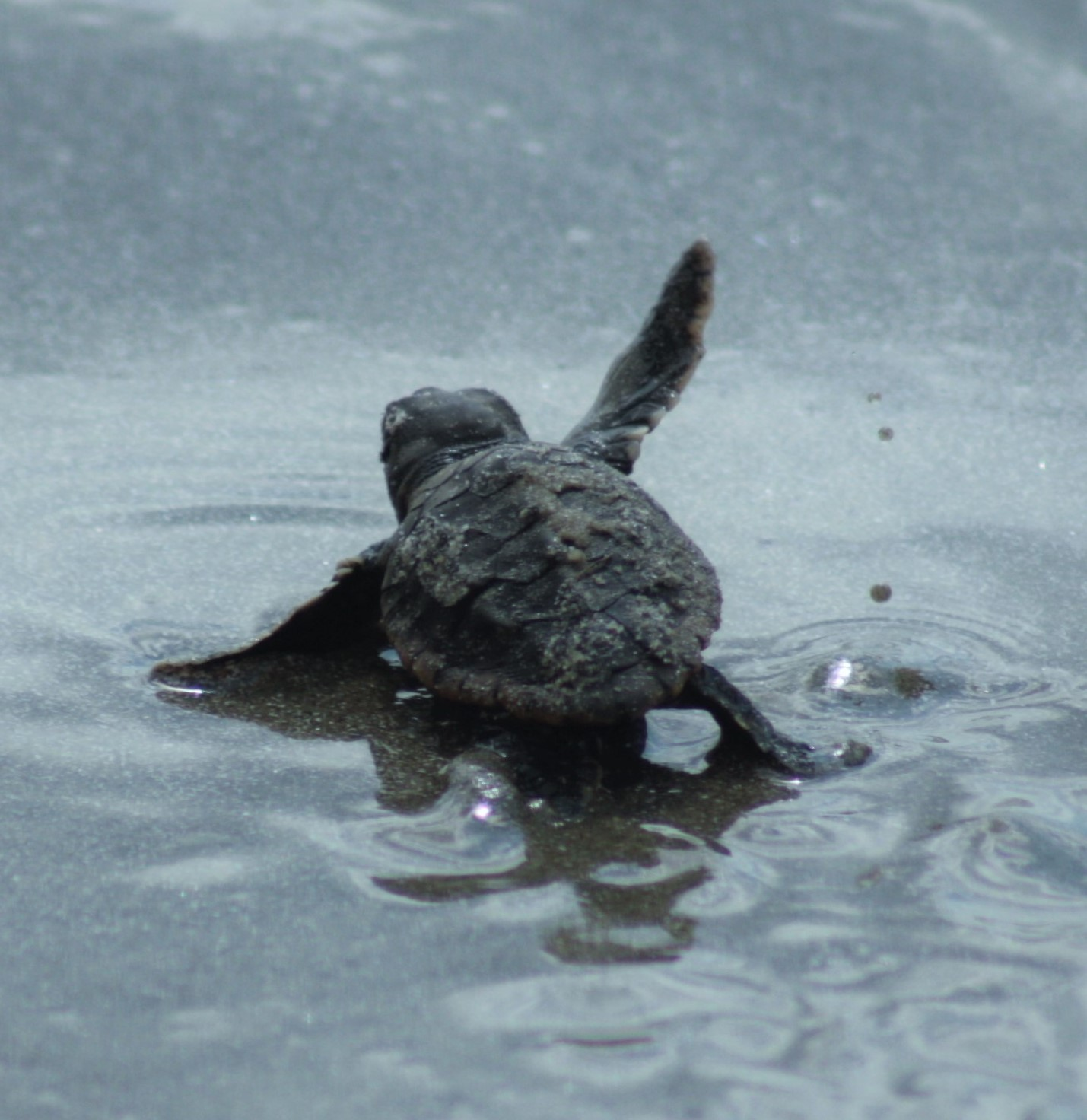 waving hatchling - cropped.jpg
