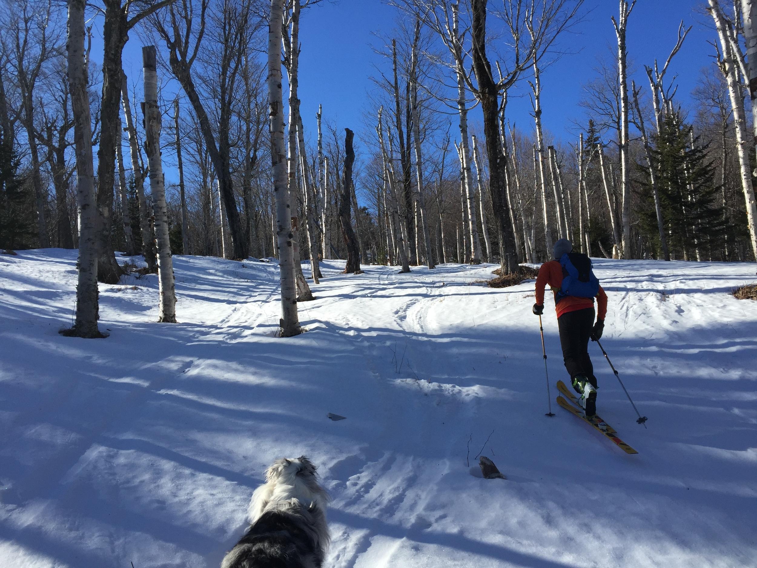 Wildcat Valley Trail - Tristian Williams - Birch Glades.