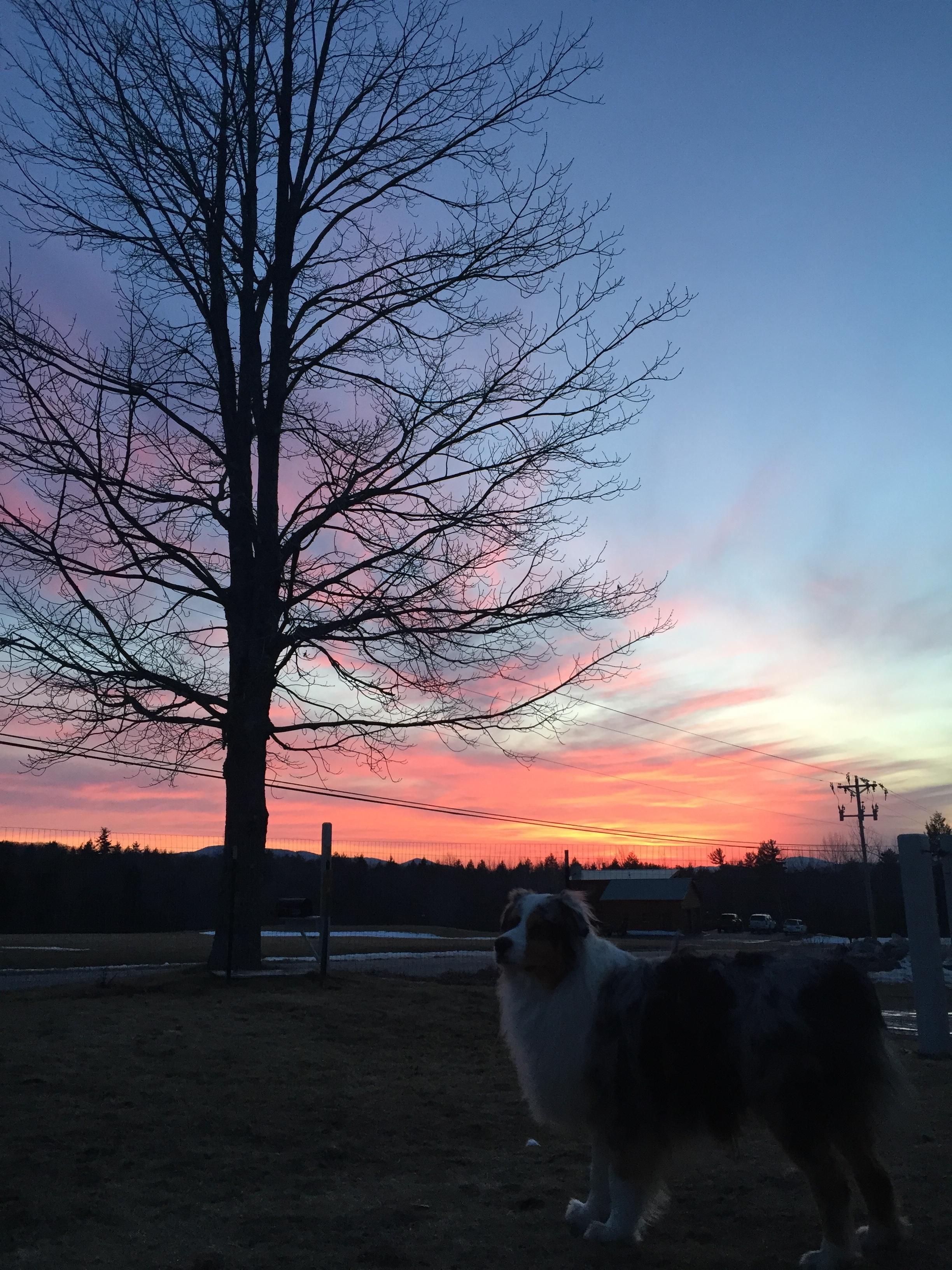 Frost Farm sunset.