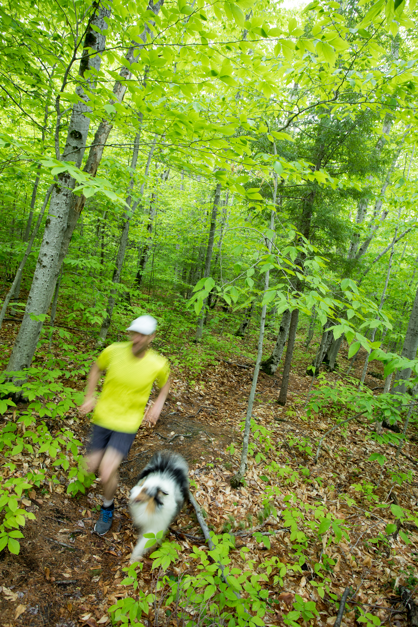 Trail Running White Mountains.jpg