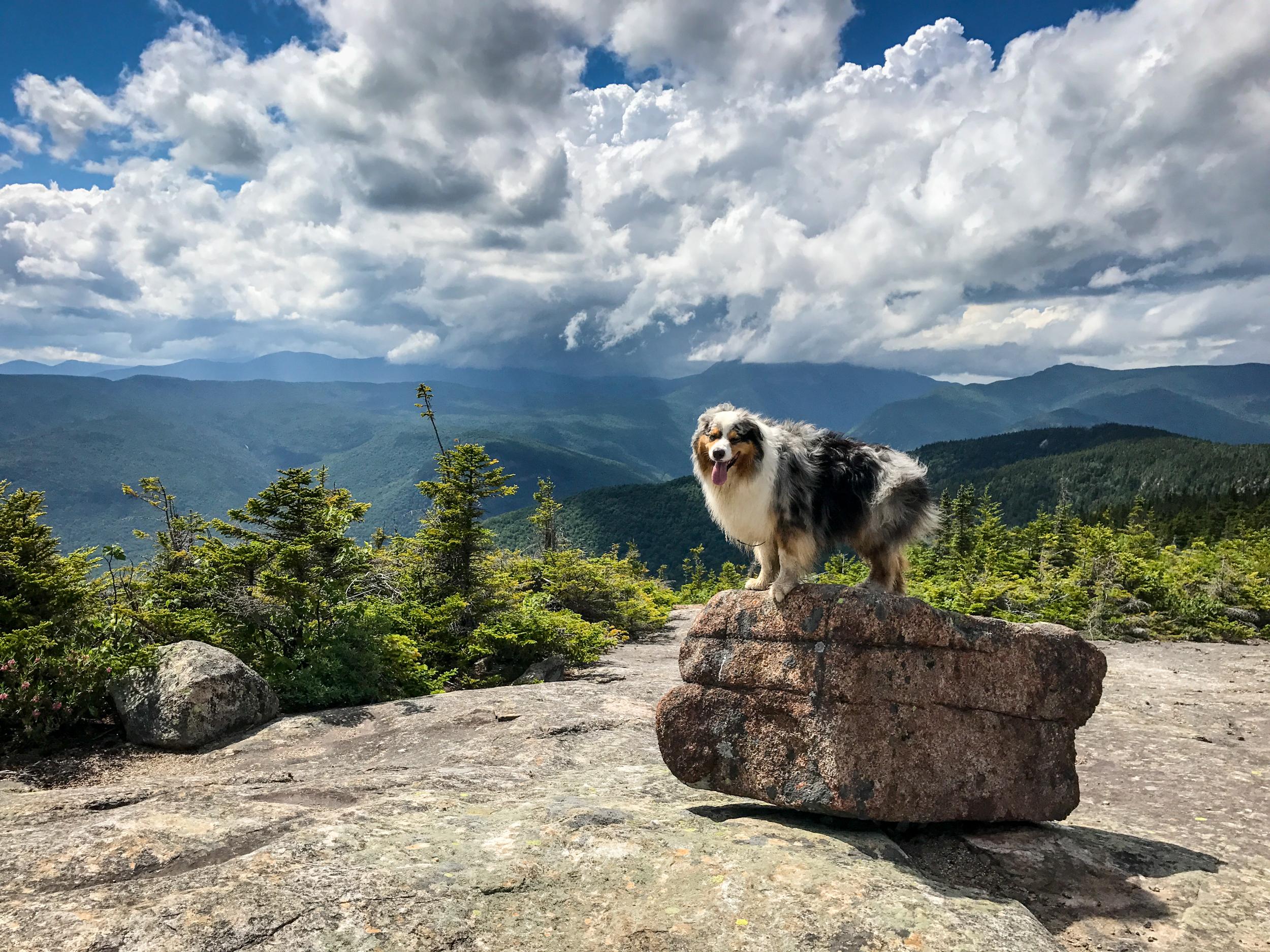 Summit of Mt Resolution, White Mountains.
