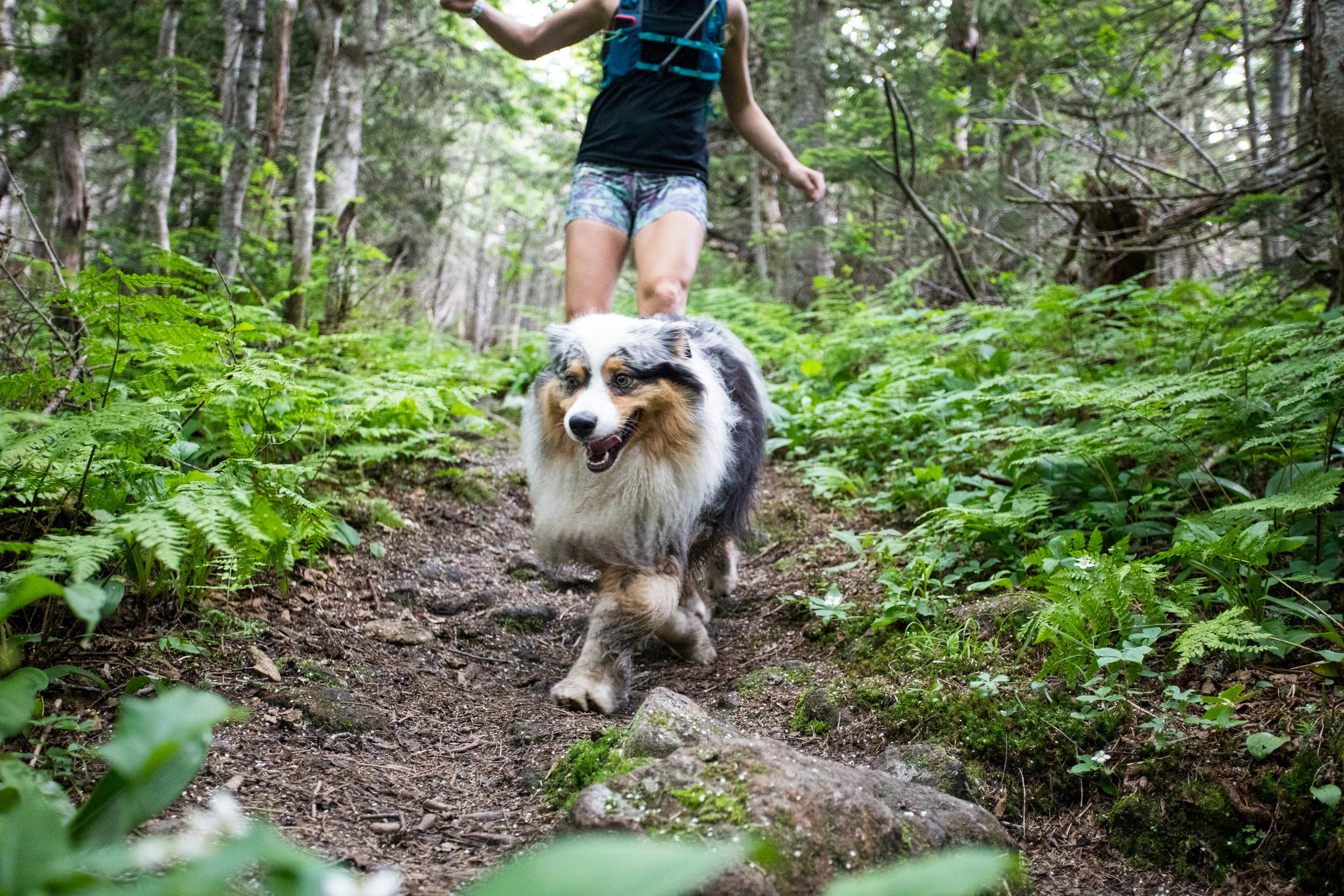 Carter Range Trail White Mountains Dog.jpg