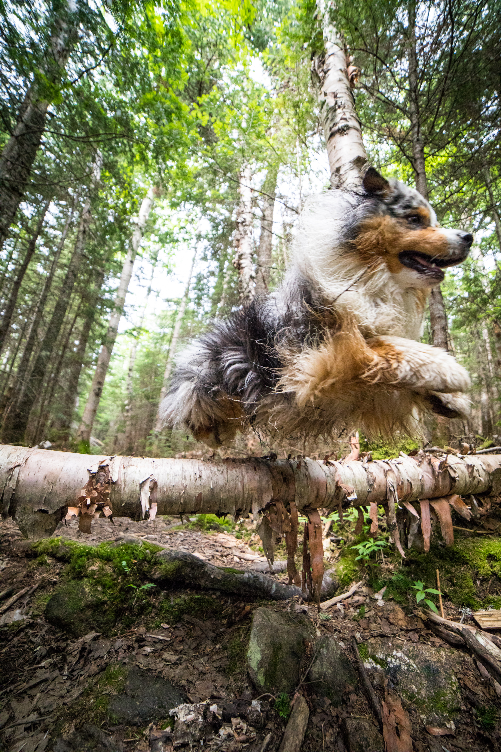 Imp Trail Dog Jump.jpg