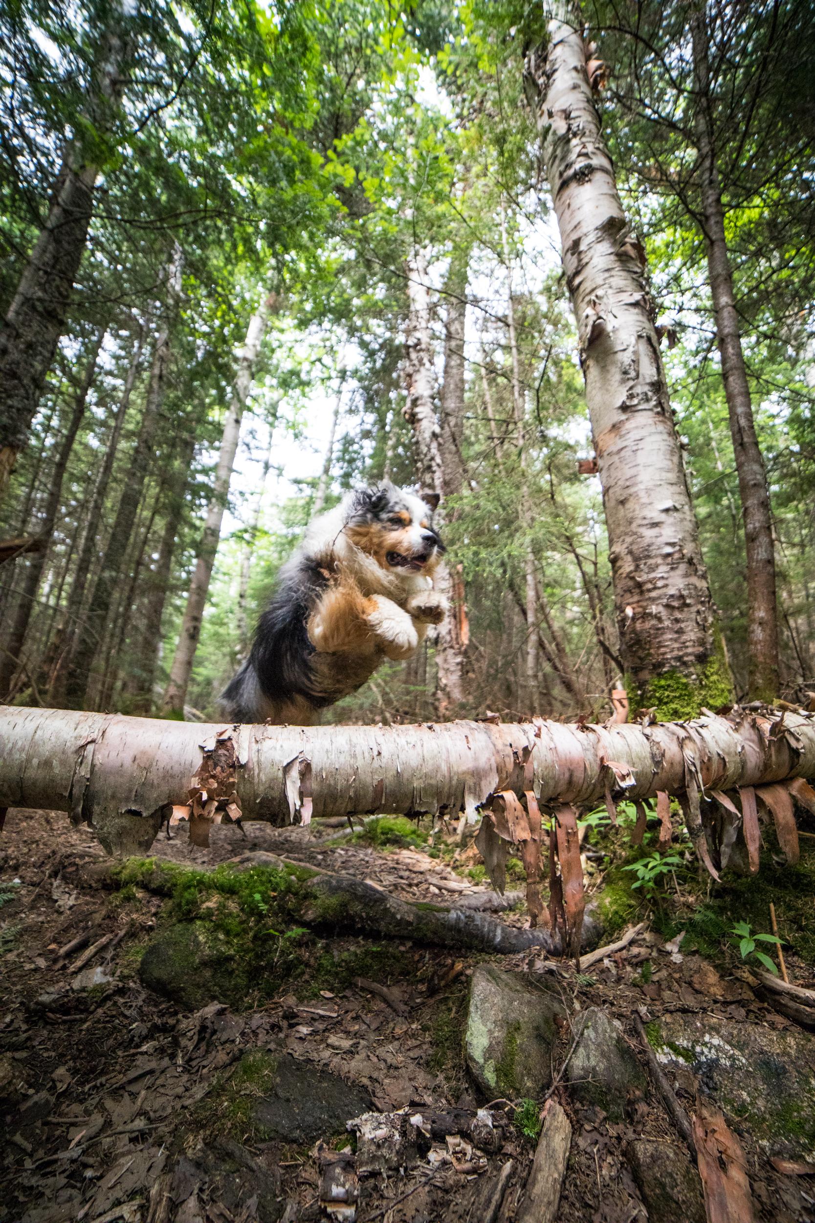 Imp Trail Dog.jpg