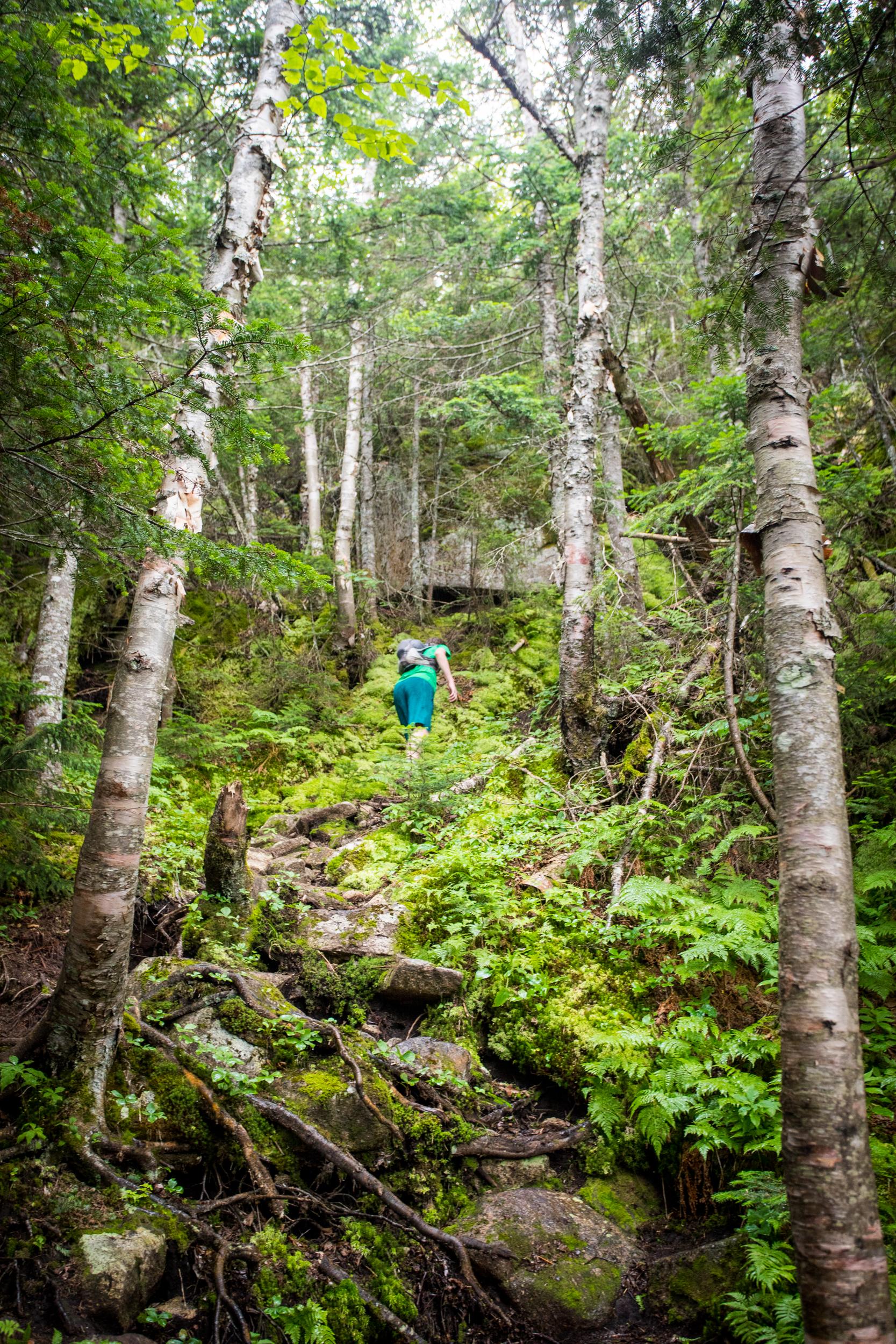 Hiking Mount Dix Trail.jpg