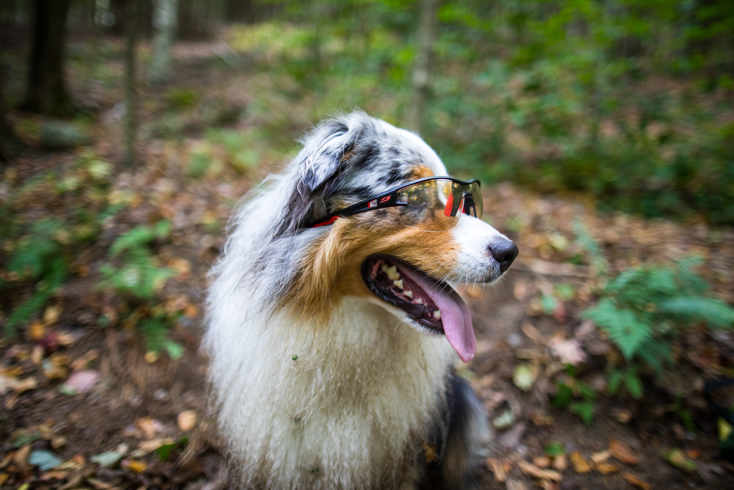 Squall Julbo Dog Sungalsses.jpg