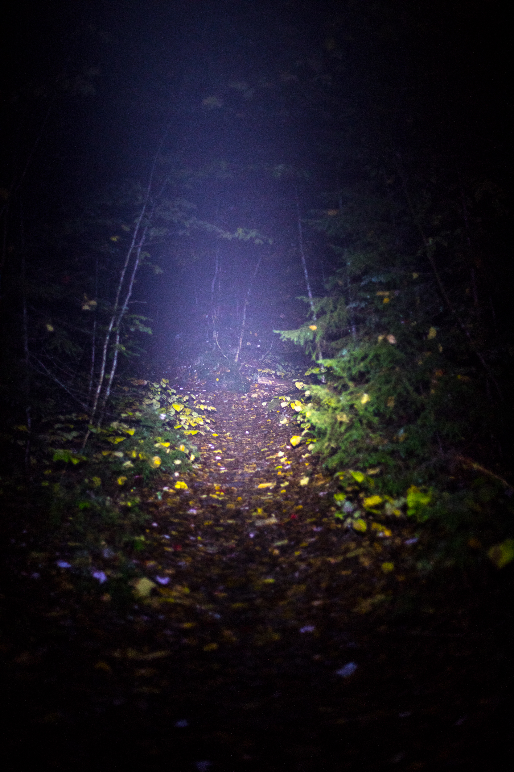 Signal Ridge Trail Night.jpg