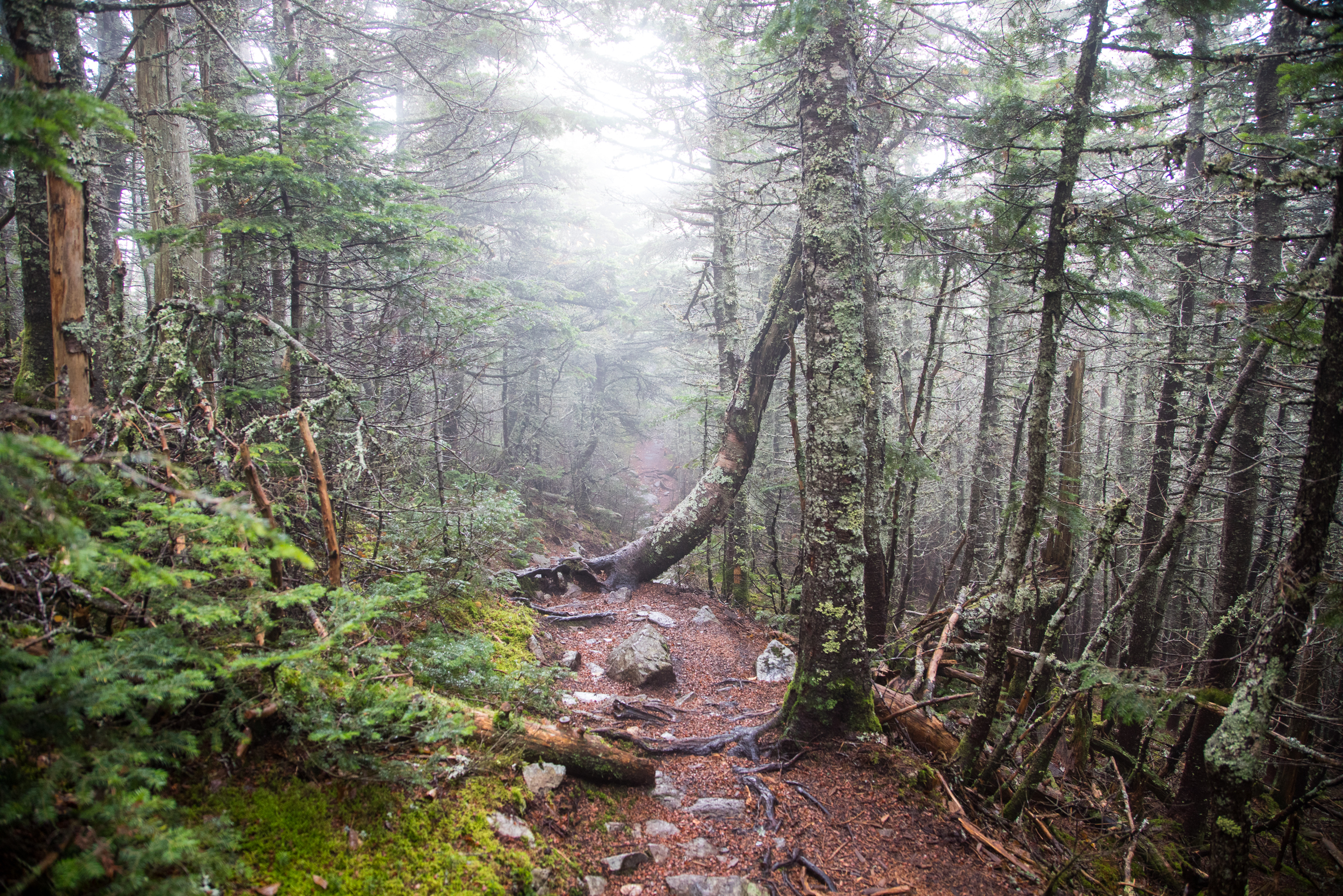 Signal Ridge Trail Carrigain White Mountains NH.jpg