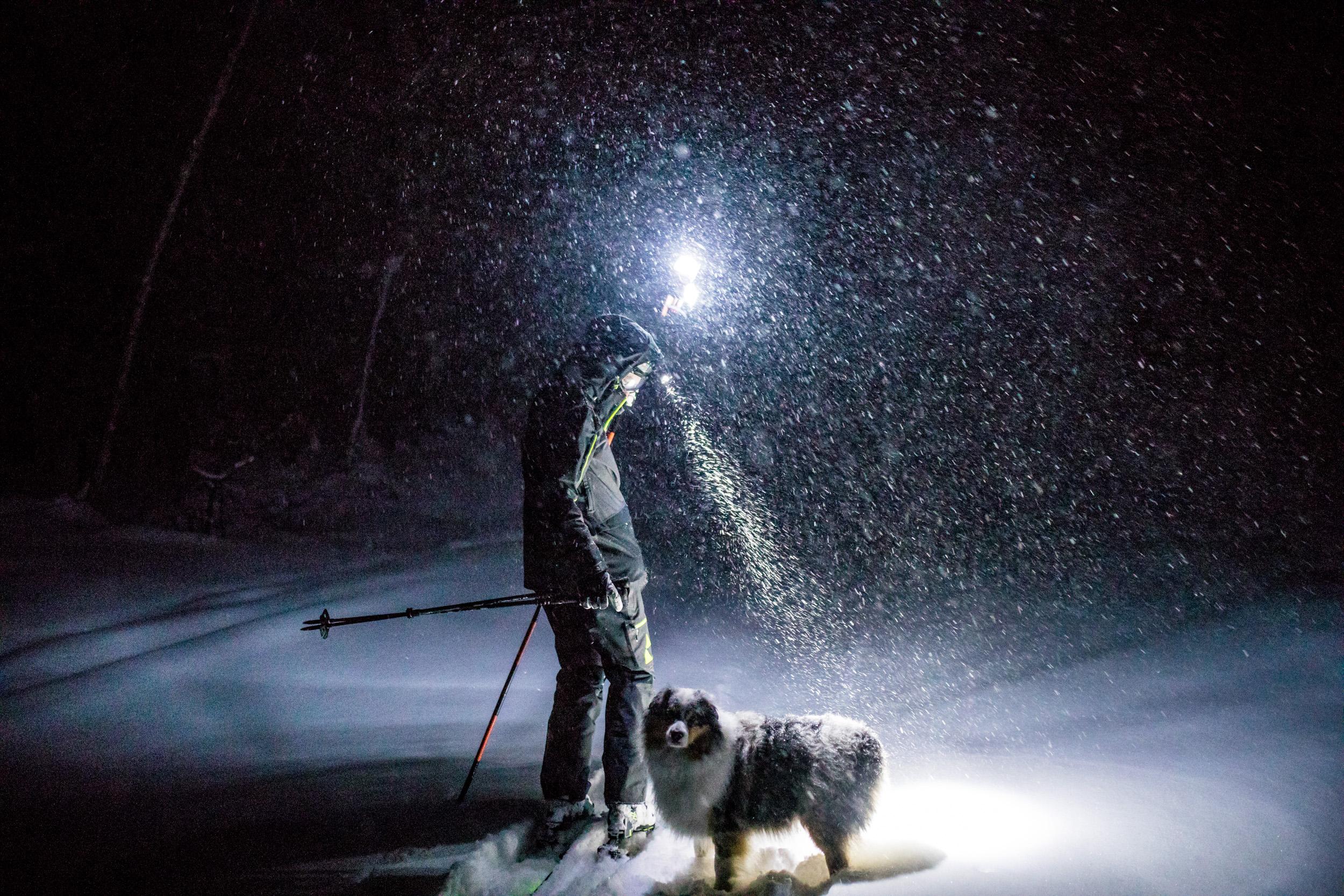 Andrew Drummond Dog Squall Australian Shepherd.jpg