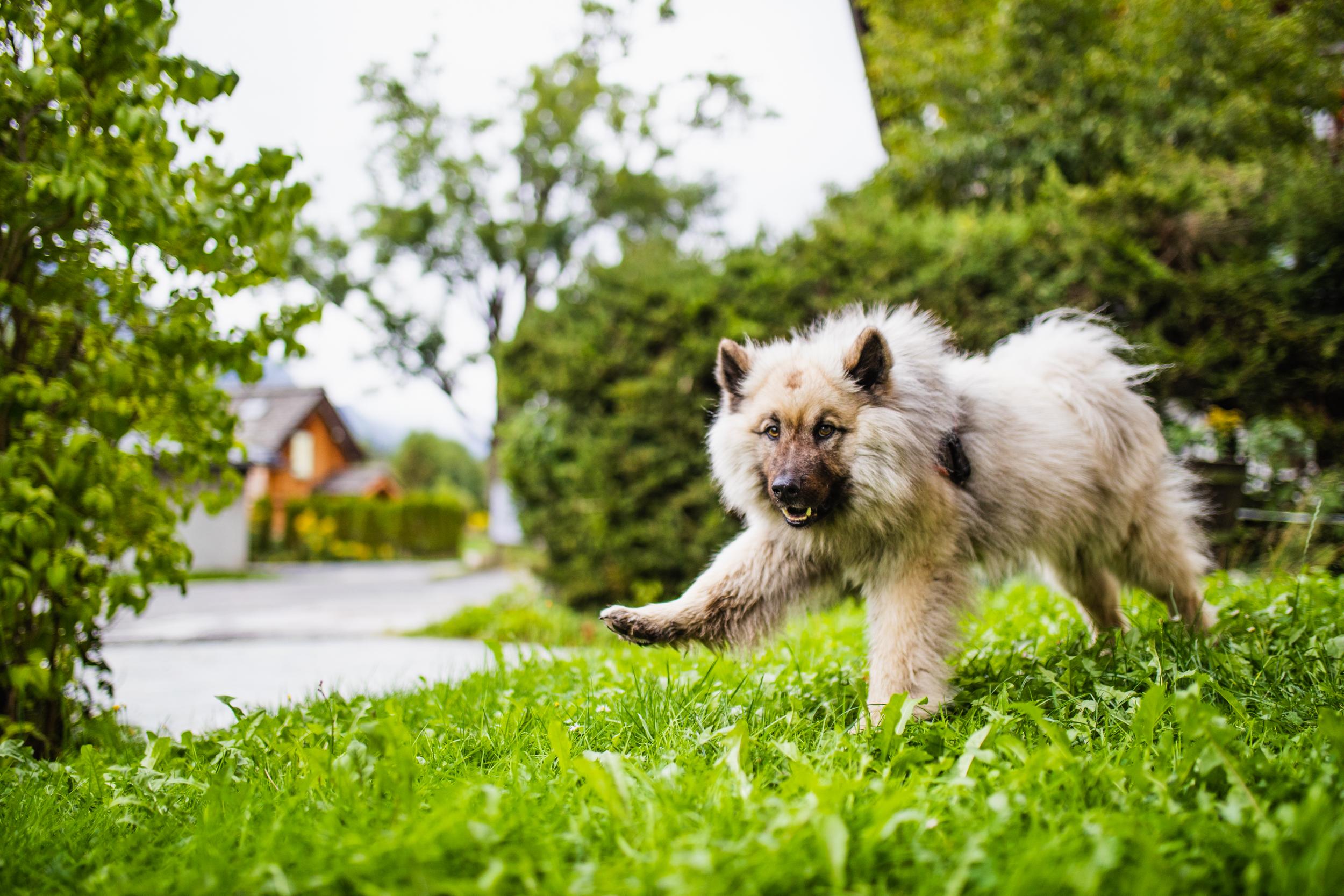 Dogs of Chamonix.jpg