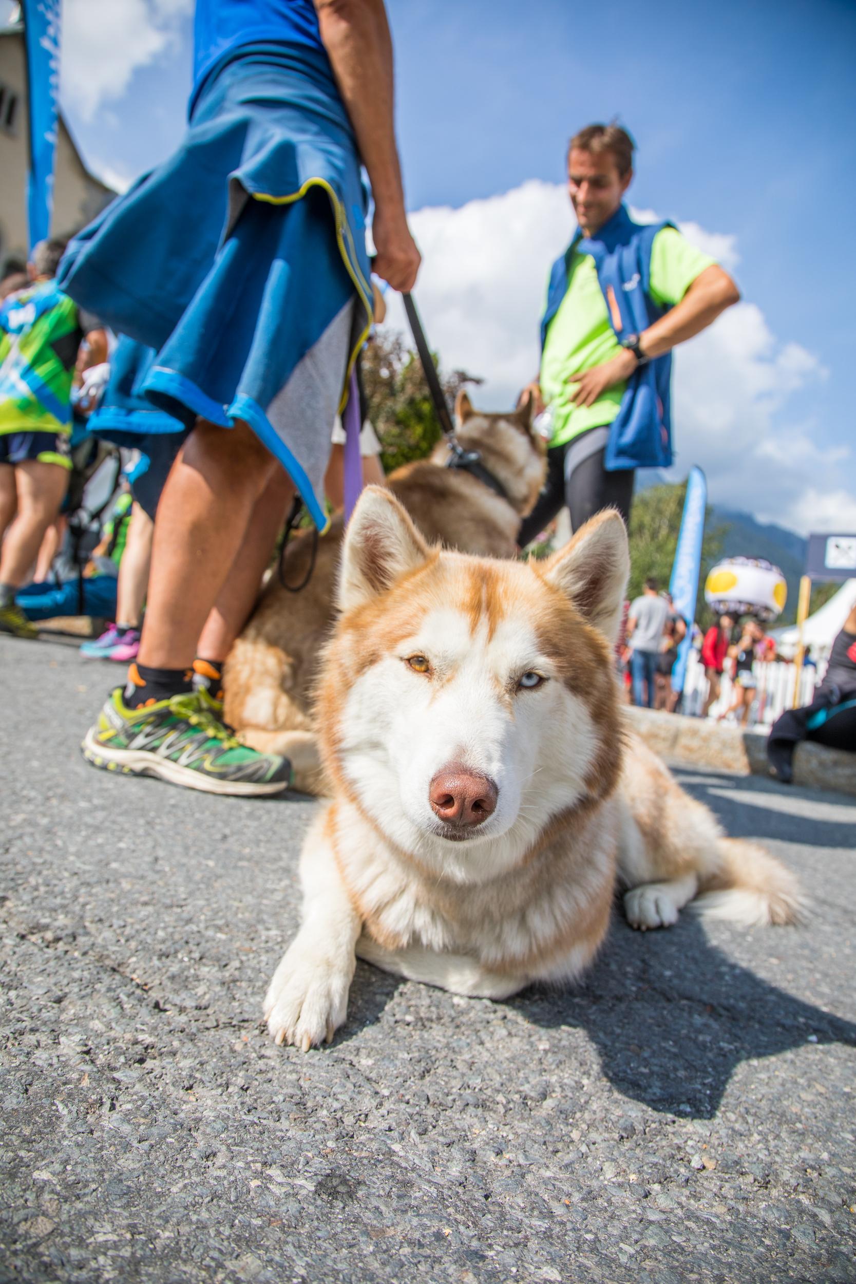 Chamonix Husky Dog.jpg