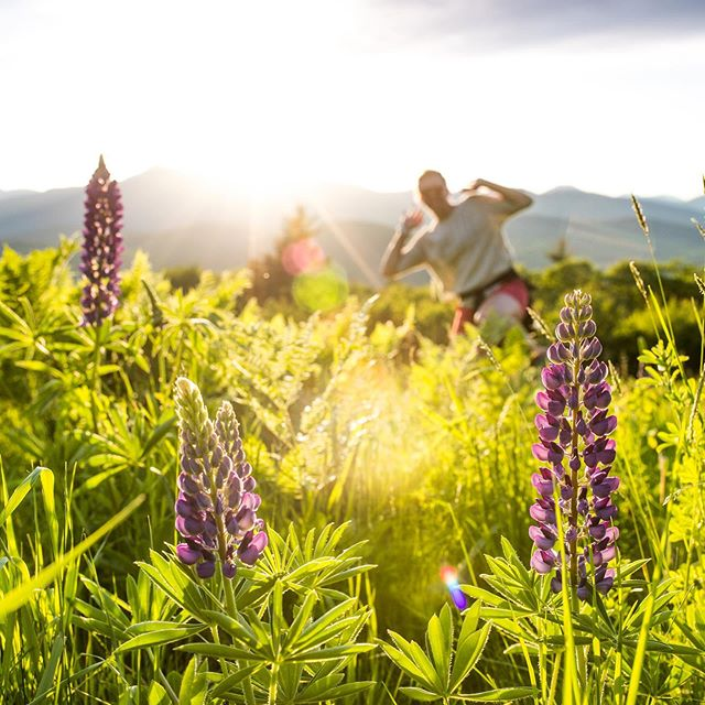 Where the lupines at?! #lupines