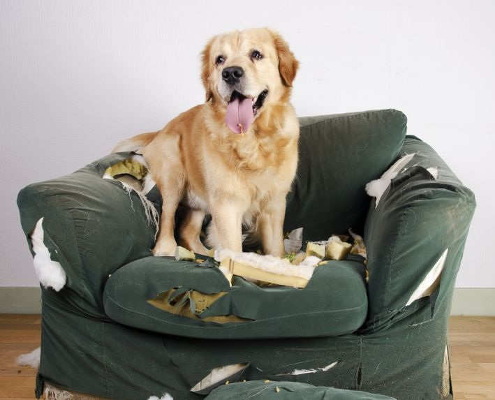 dog-destroyed-chair-upholstery.jpg