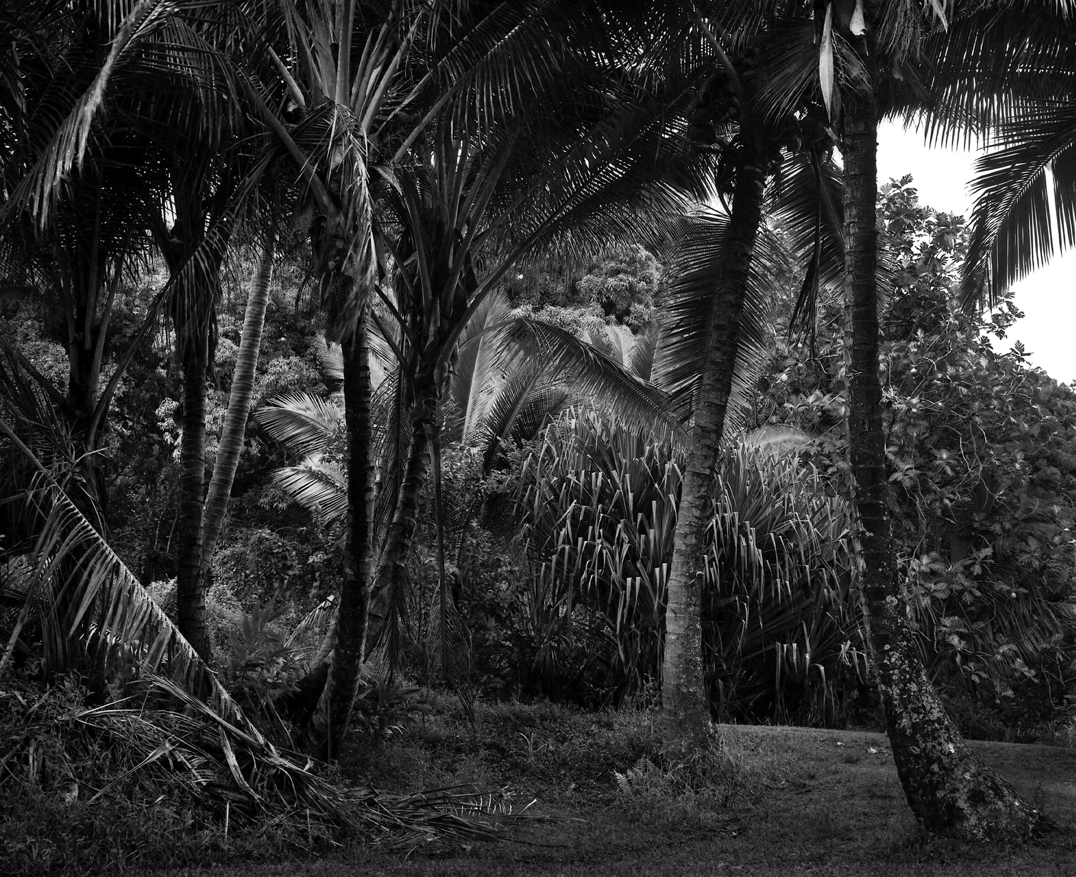 Image © Jon Goodman.  The picnic table , Kapahu Living Farm, Kipahulu. Photogravure.