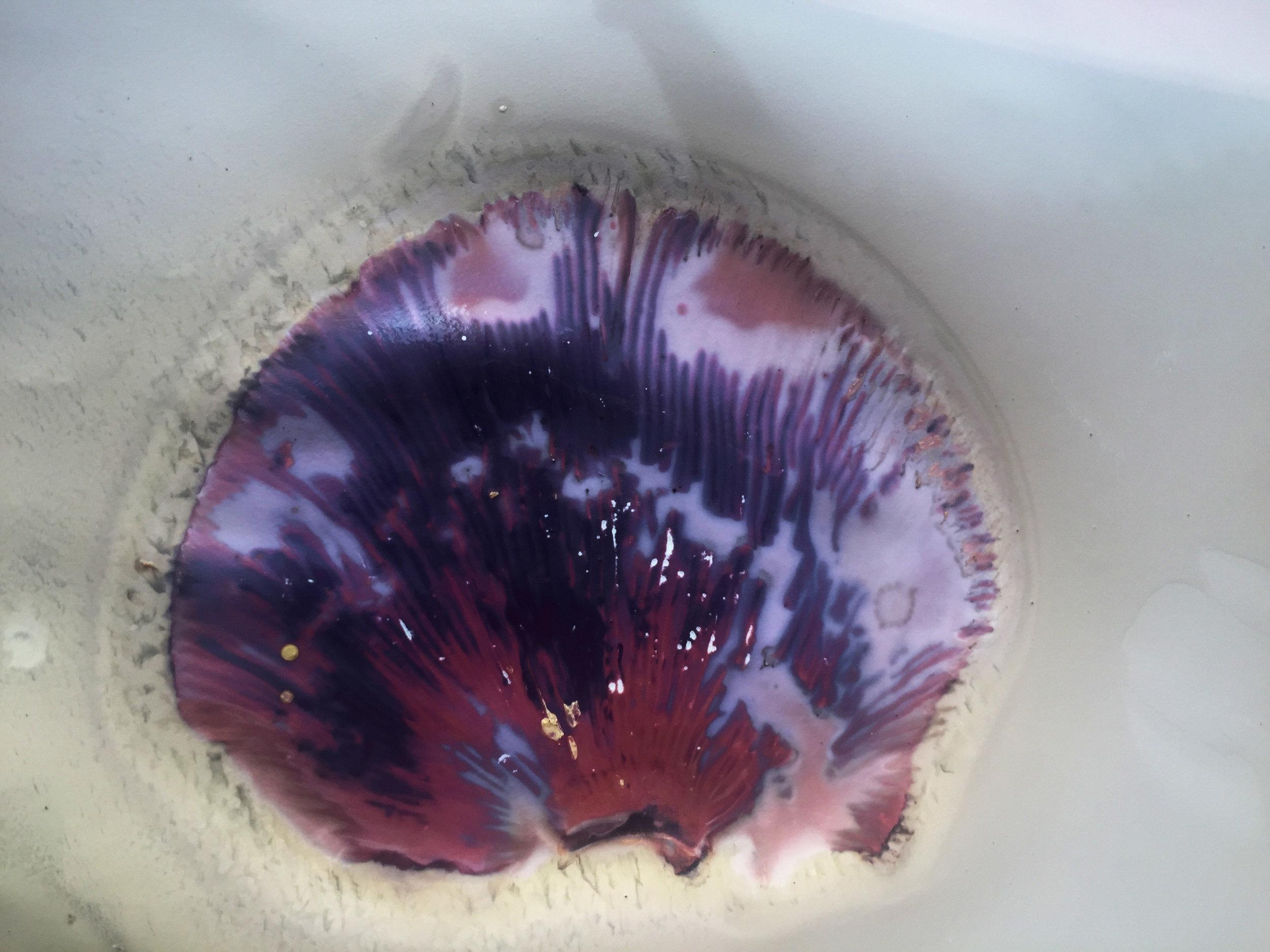 purplelumen_fungus.jpg