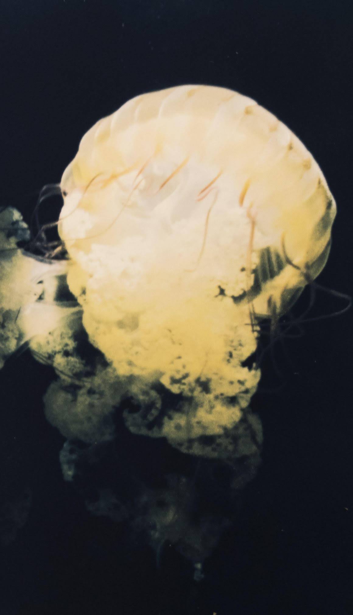Jellyfish, Lauren Messert, Cyanotype over inkjet.jpg
