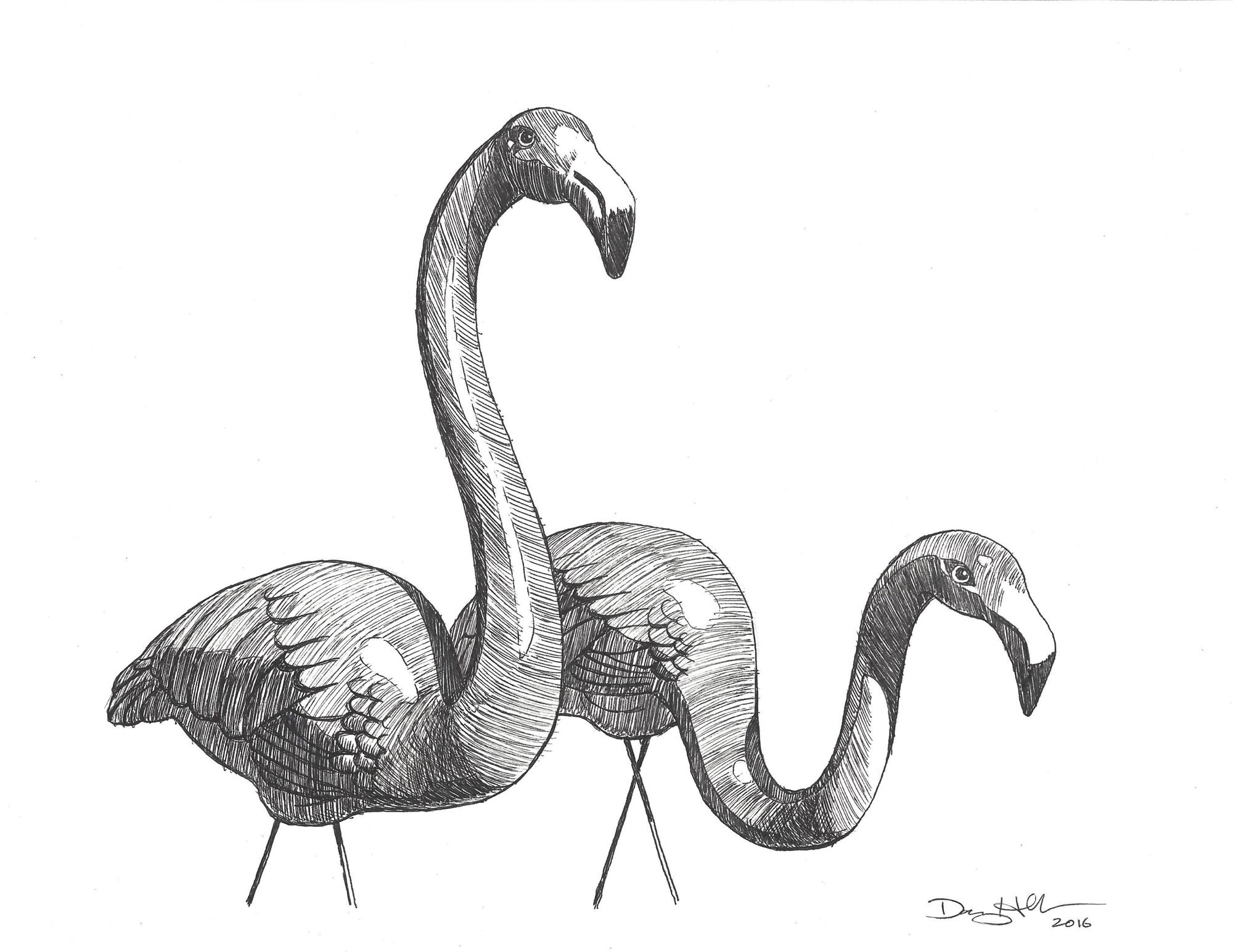 Flamingo Drawing 1