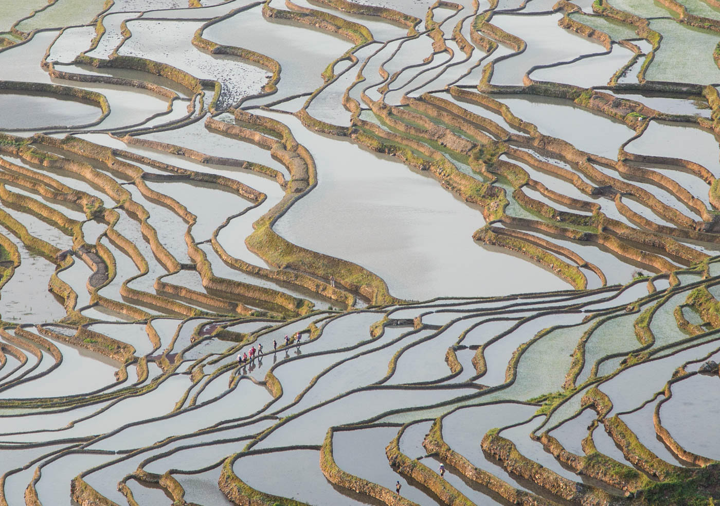 Foundry Gallery-Kathryn Mohrman-Yunnan Rice PTerraces-18x22-Photograph-2016-$300.jpg