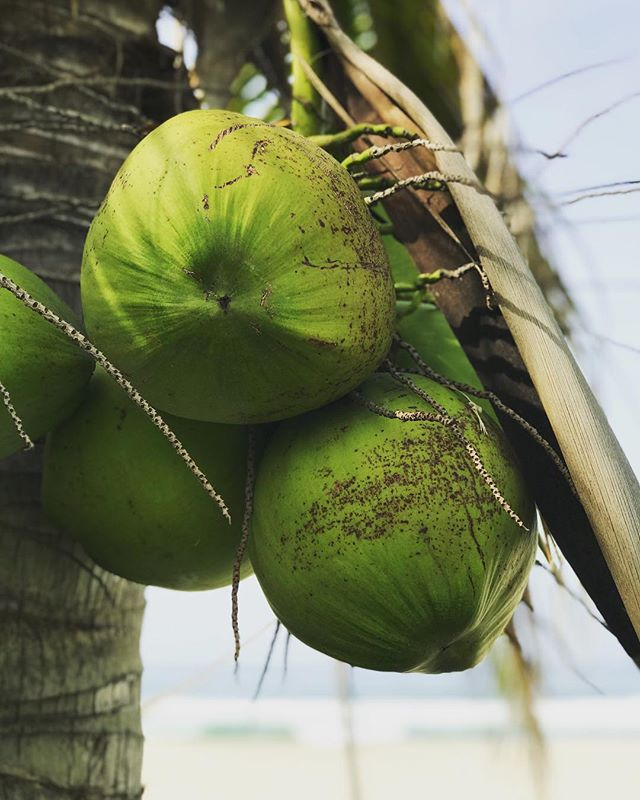How does a coconut kombucha sound right now? #pocionmx  #kombucha #healthy #glutenfree #scoby #lifestyle #healthylifestyle #detox #vegan