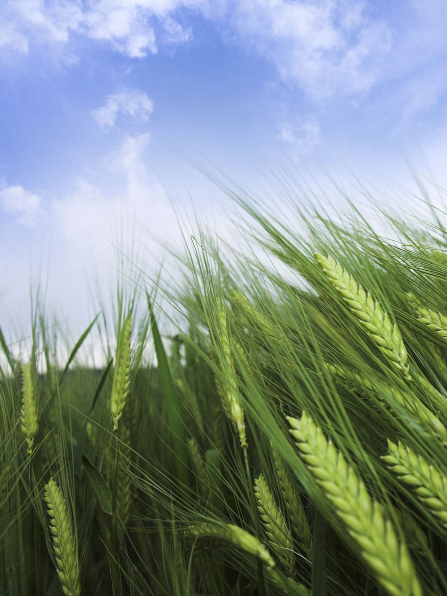 "Matthew 9:37,38 ""...The harvest truly is plentiful..."""