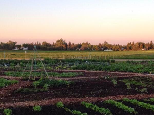 Urban Prairie Farm (image via their website)