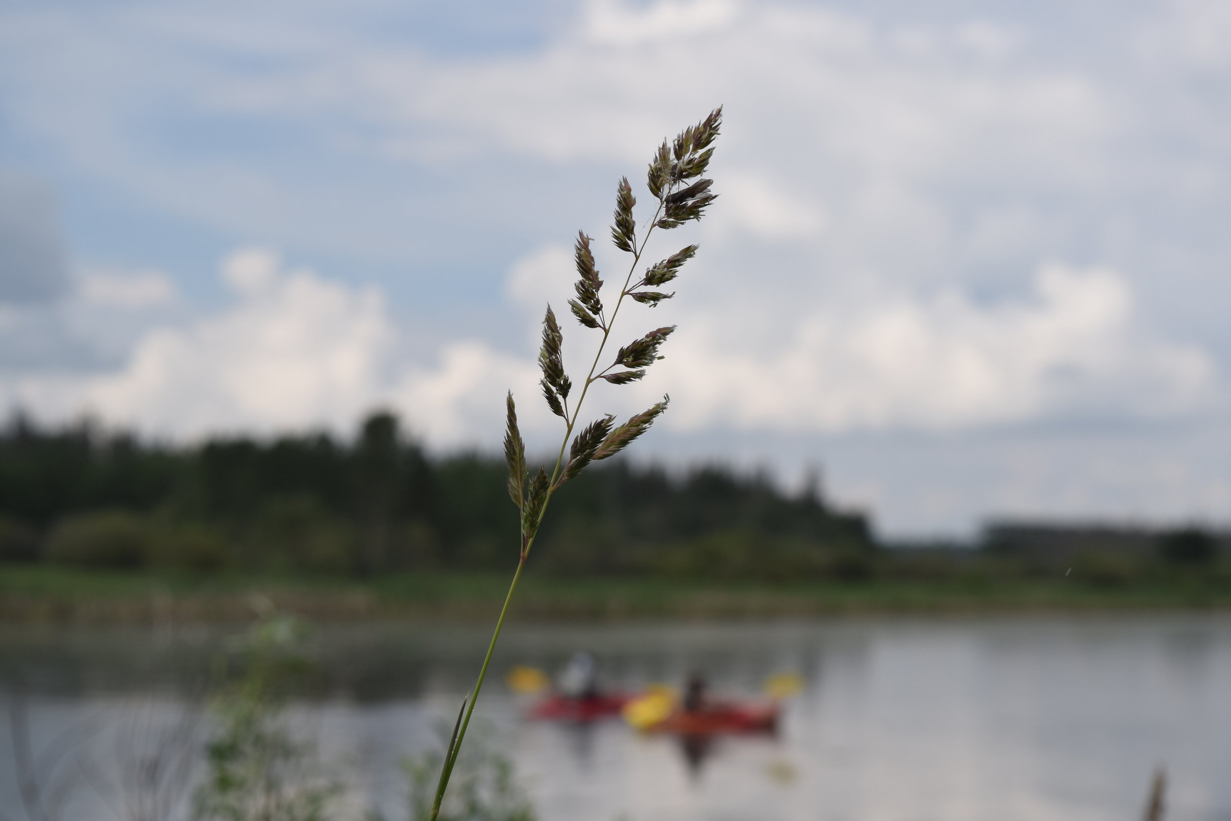 The Sturgeon River presents a serene landscape that is now safe enough for kayakers and wildlife alike.