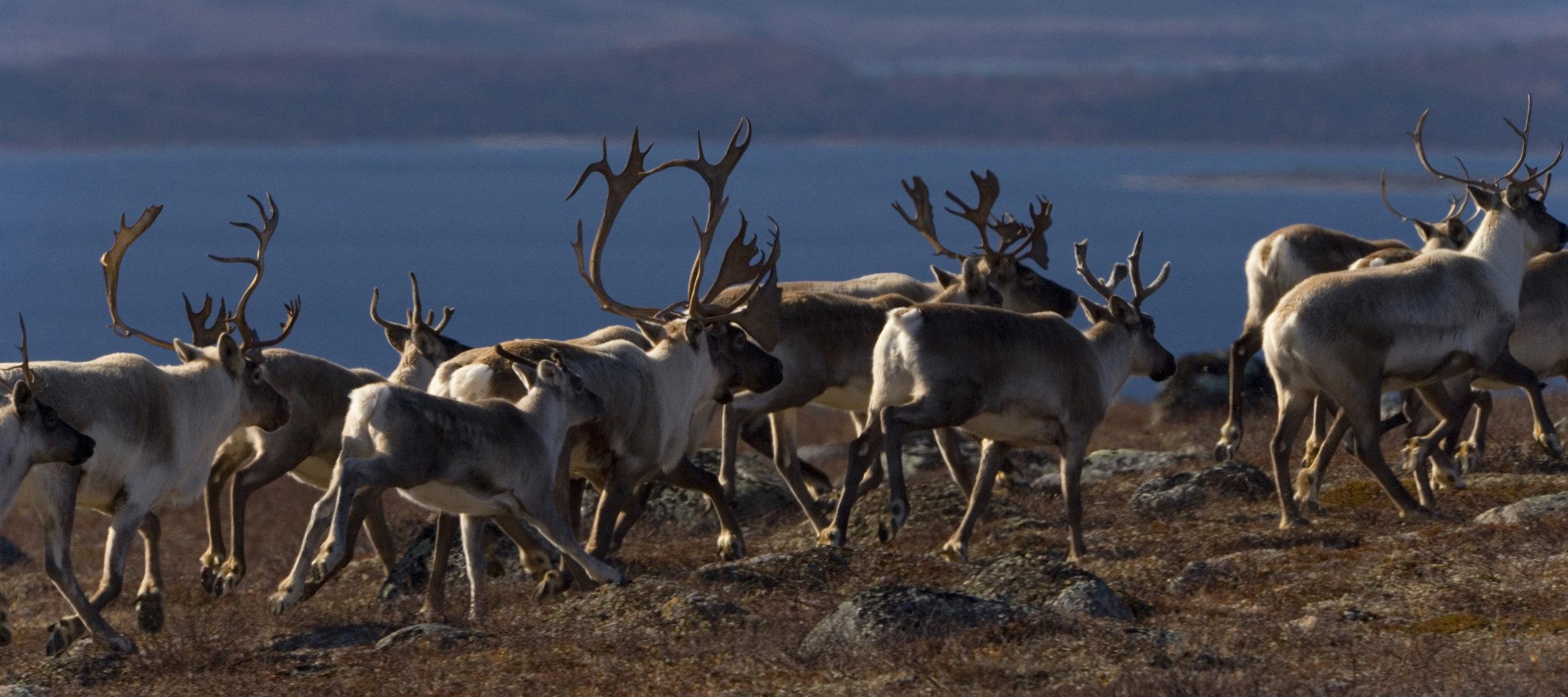 Image courtesy of WWF Canada.