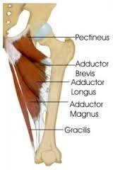 Groin Blog anatomy.jpg