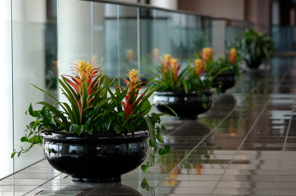 bromeliad bowl.jpg