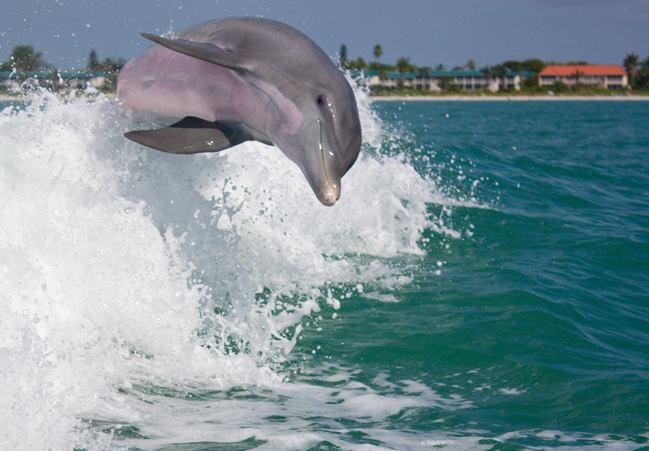 So close dolphin nwt.jpg