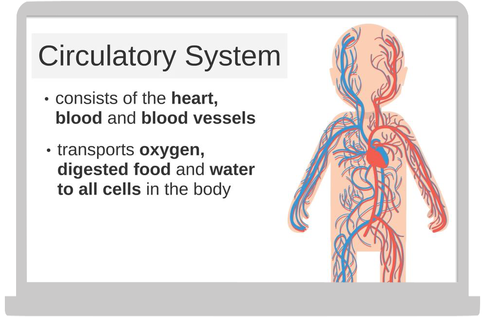 body systems p3 p4 science 3.png