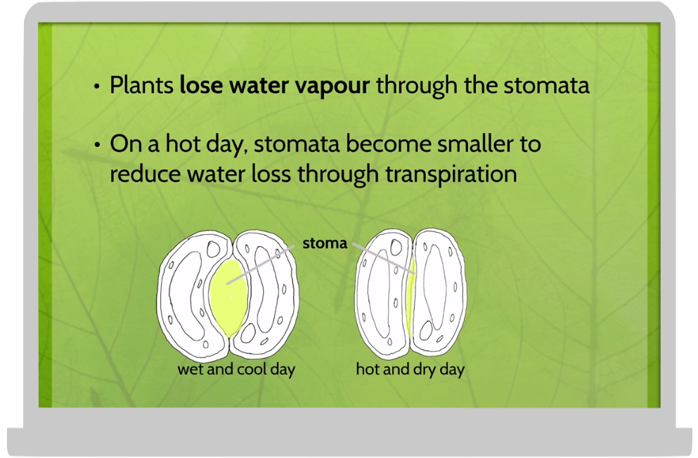 plant science 3.png
