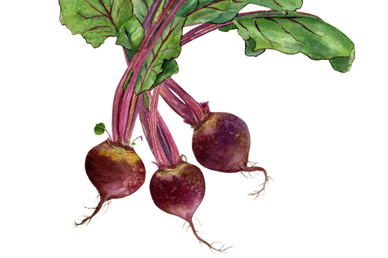 beets-detail.jpg
