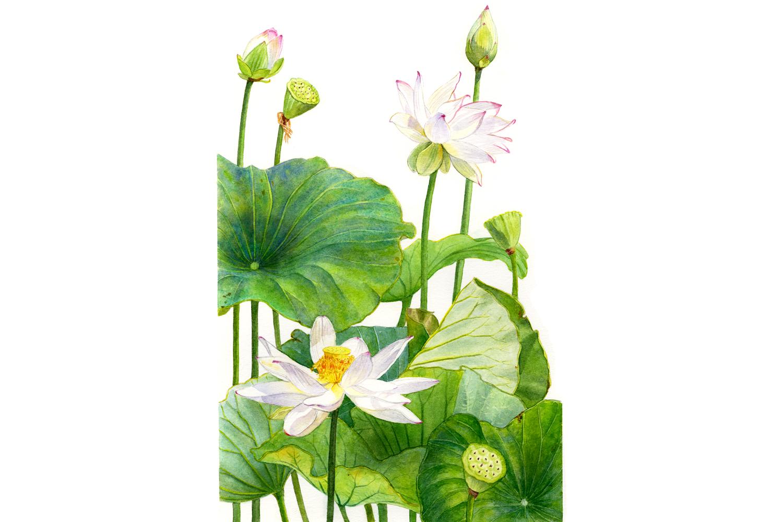lotuslg.jpg