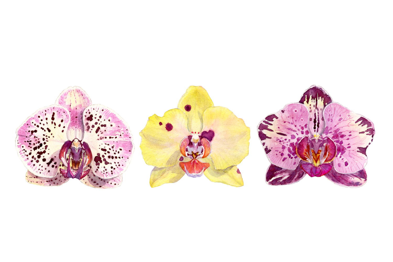 three-orchids.jpg