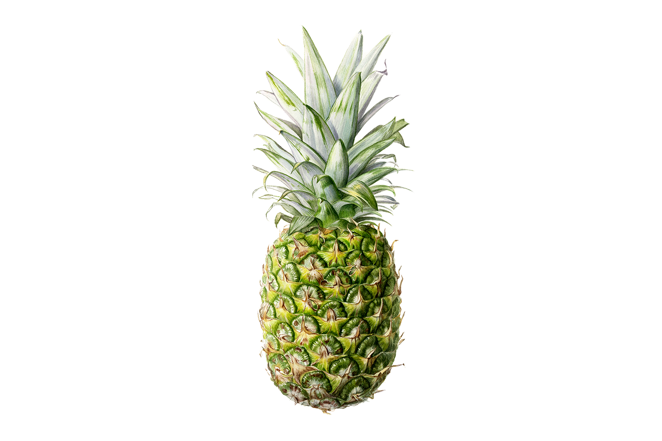 lr-pineapple-wide.jpg
