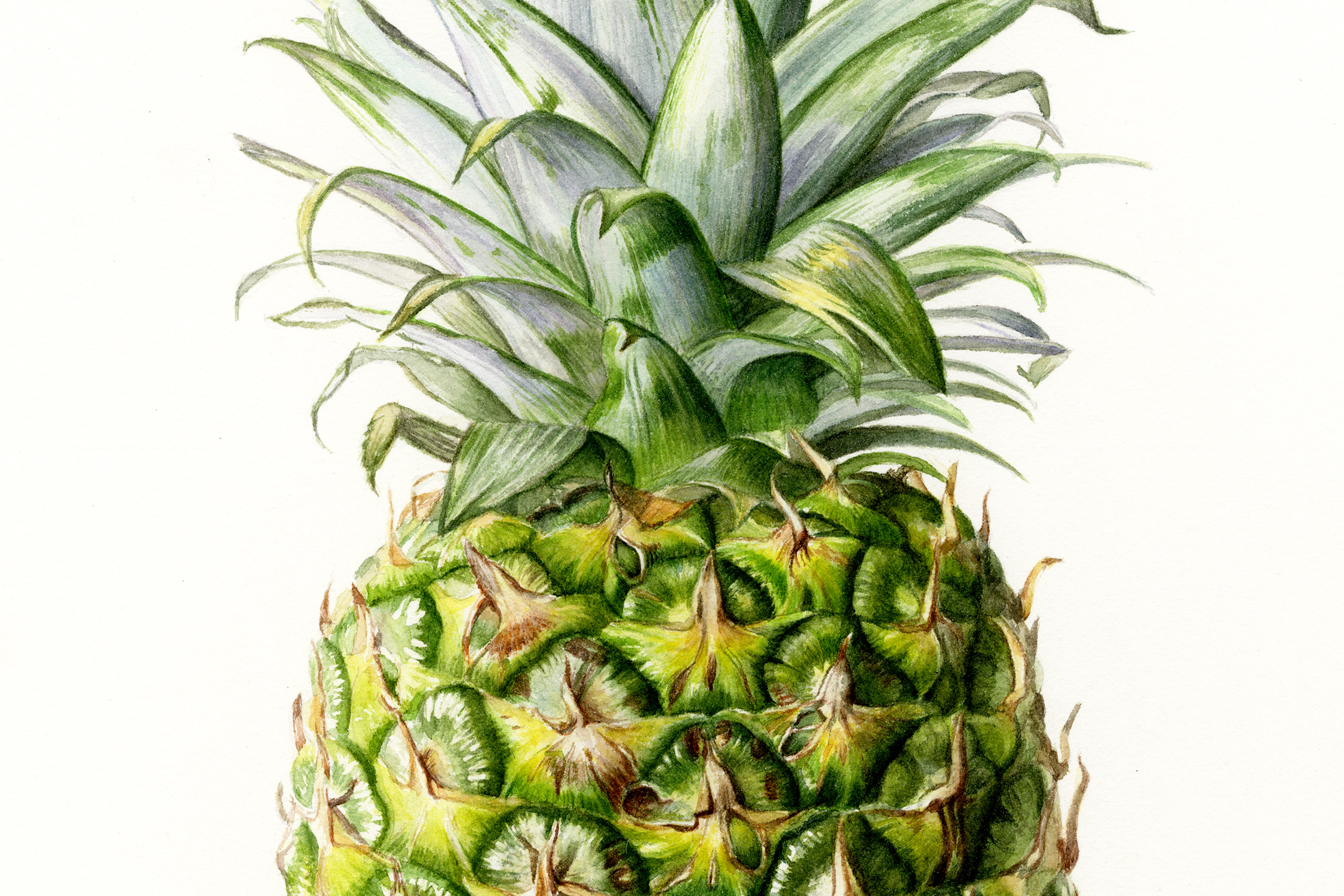 lr-pineapple closeup.jpg