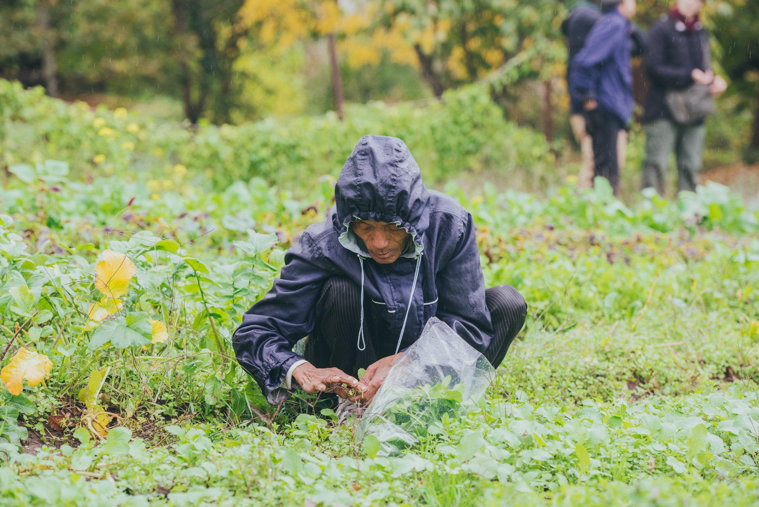Refuge Garden - Mercy Corps NW Another Look 10-30-15 2015-15.jpg